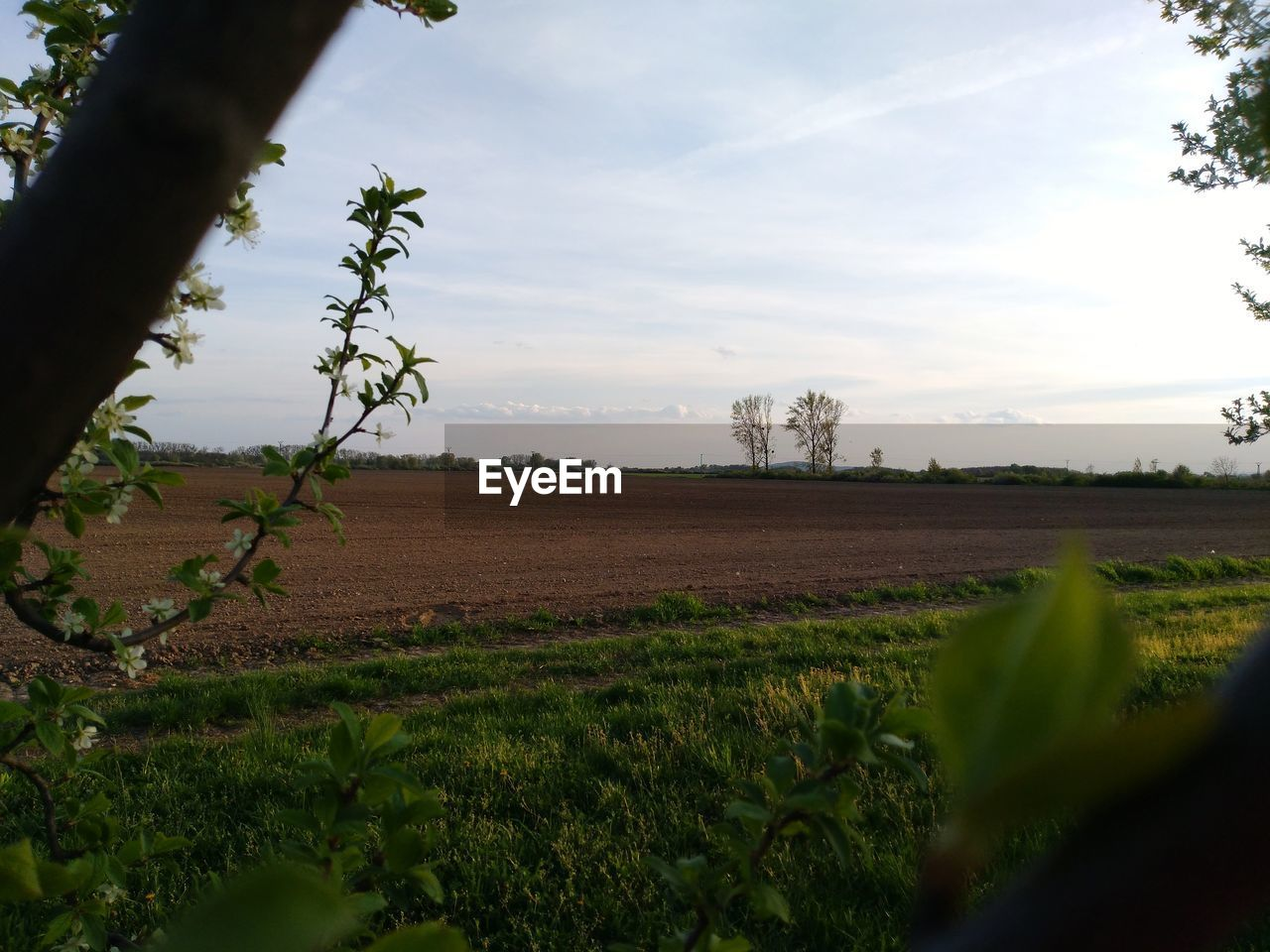 plant, field, landscape, land, growth, environment, beauty in nature, tranquility, agriculture, rural scene, tree, nature, sky, scenics - nature, tranquil scene, no people, farm, cloud - sky, day, green color, outdoors, plantation