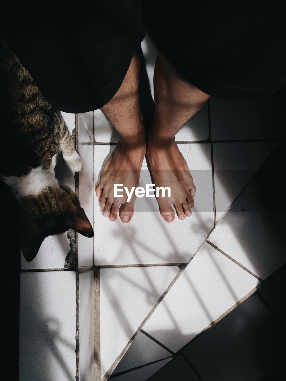 Low Section Of Man Standing By Cat On Tiled Floor