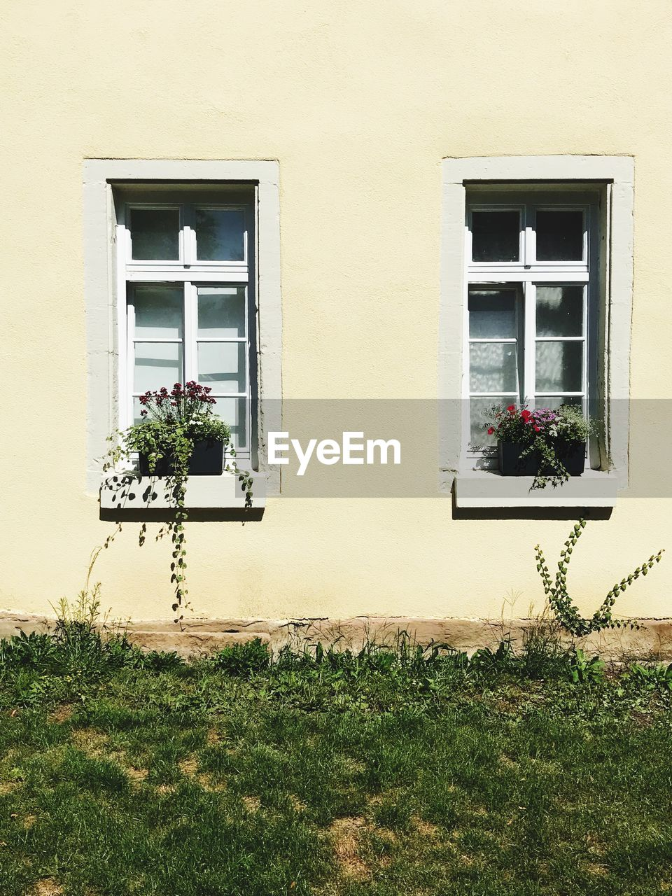 building exterior, architecture, built structure, window, plant, building, flower, flowering plant, no people, day, nature, house, outdoors, grass, residential district, growth, wall - building feature, white color, potted plant, yellow, window box, window frame