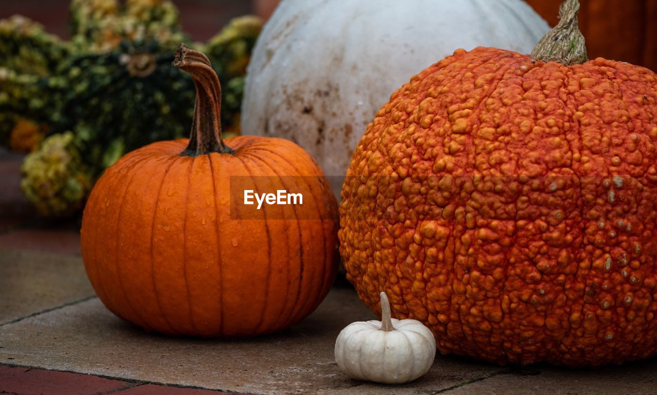 food, food and drink, pumpkin, healthy eating, freshness, orange color, still life, wellbeing, vegetable, no people, focus on foreground, close-up, day, fruit, gourd, raw food, indoors, autumn, table, celebration