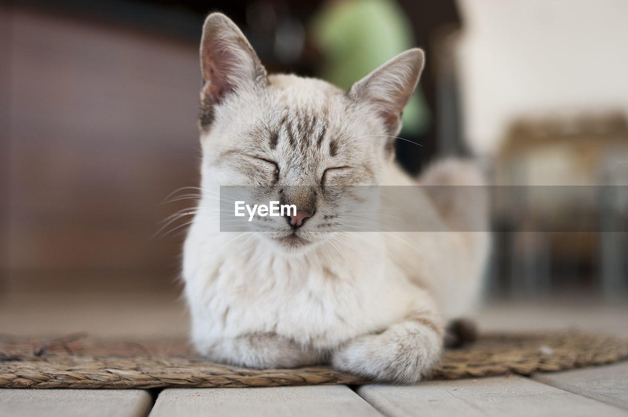 Cat resting indoors