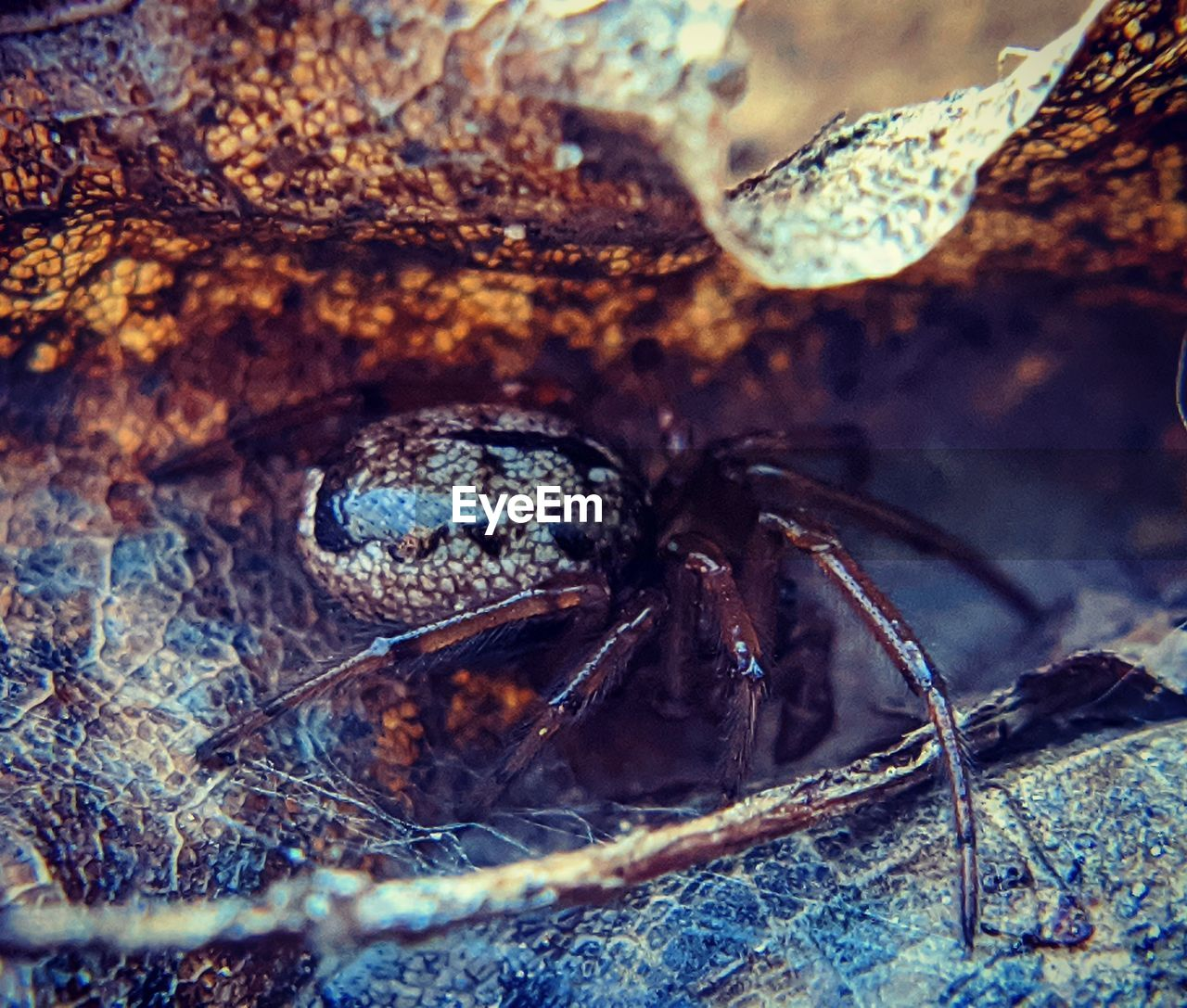 CLOSE-UP OF SPIDER IN WATER