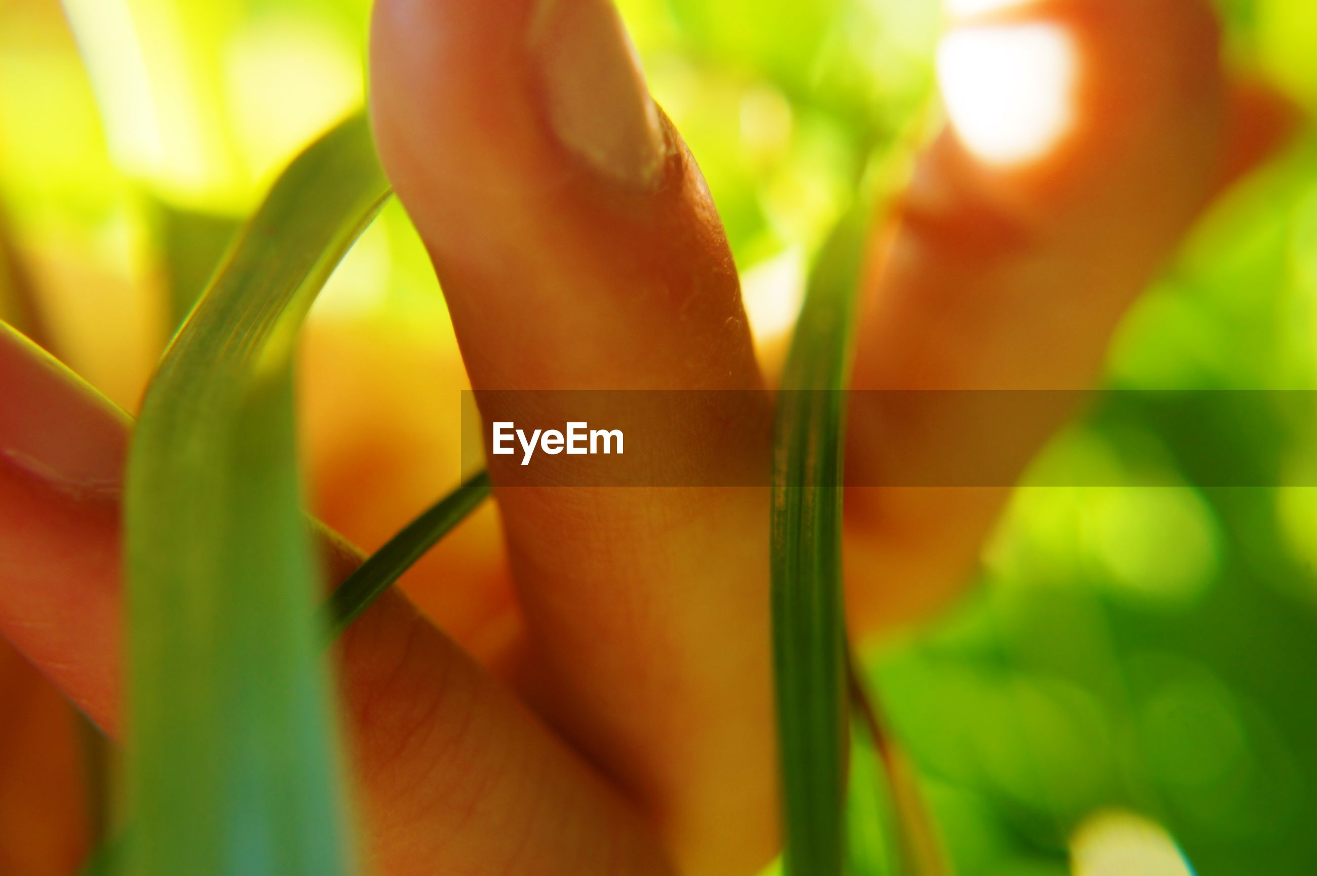 Extreme close-up of hand holding plants outdoors