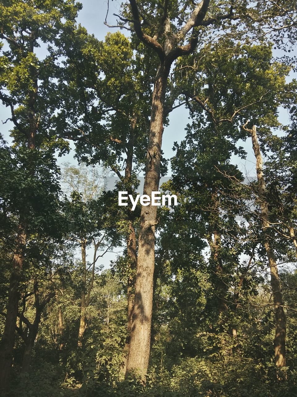 tree, forest, nature, growth, tree trunk, day, low angle view, no people, outdoors, tranquil scene, beauty in nature, scenics, tranquility, branch, landscape, sky