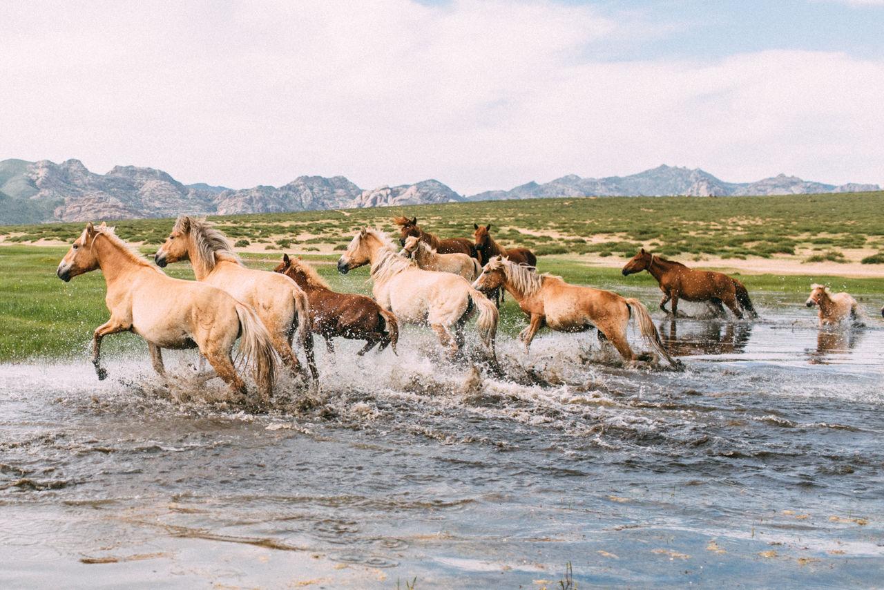 Horses Running In Water Against Sky