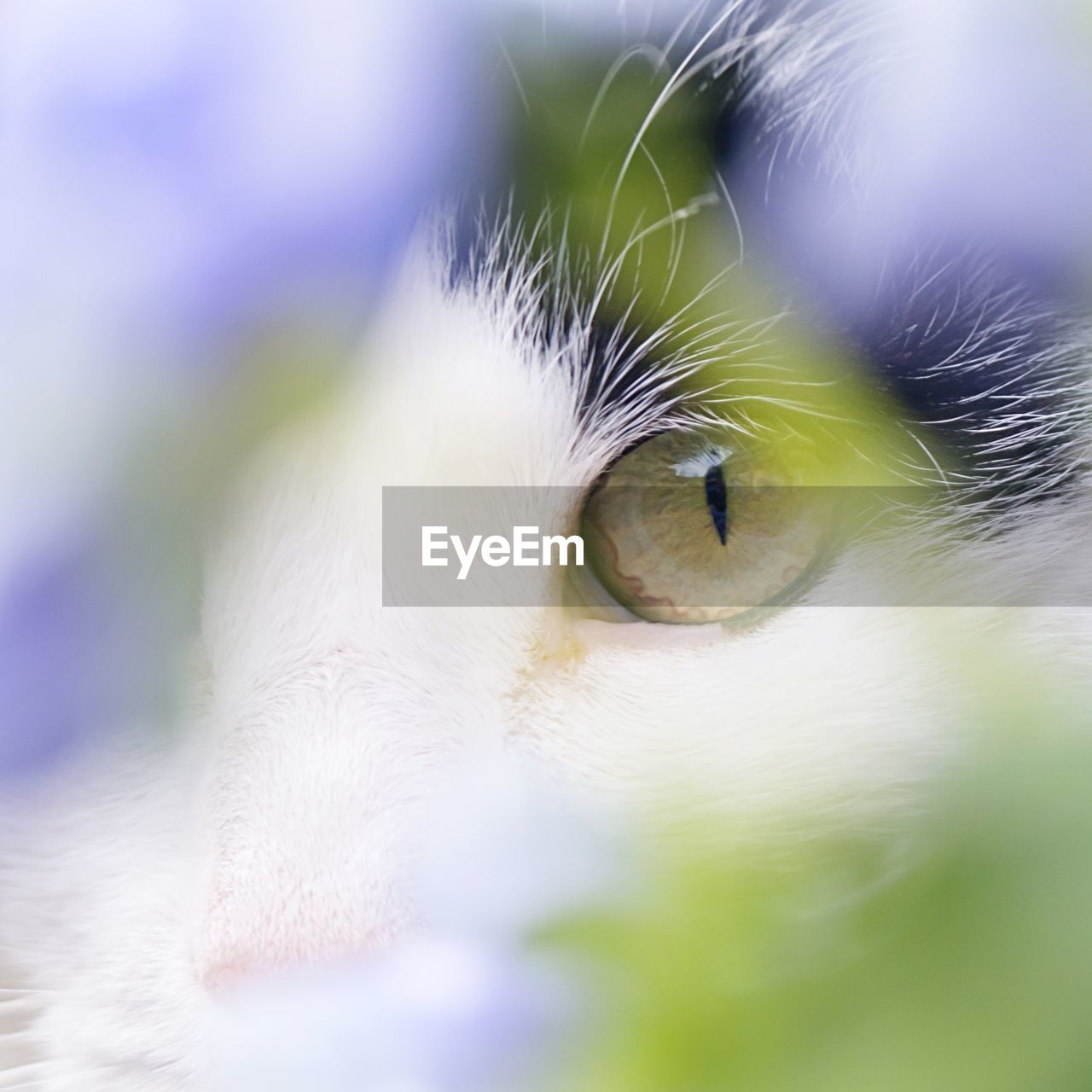 Extreme close up of a cats eye
