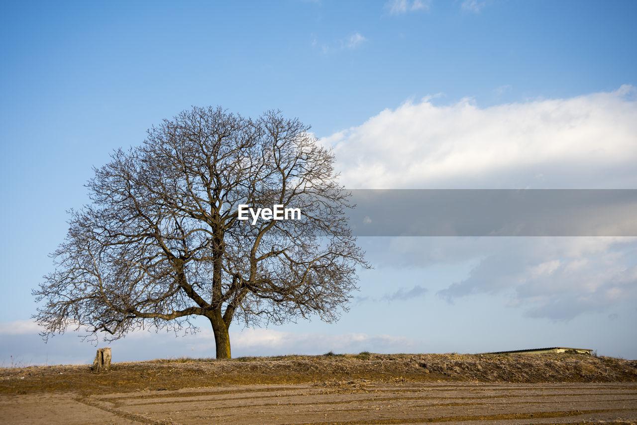 SINGLE TREE AGAINST SKY
