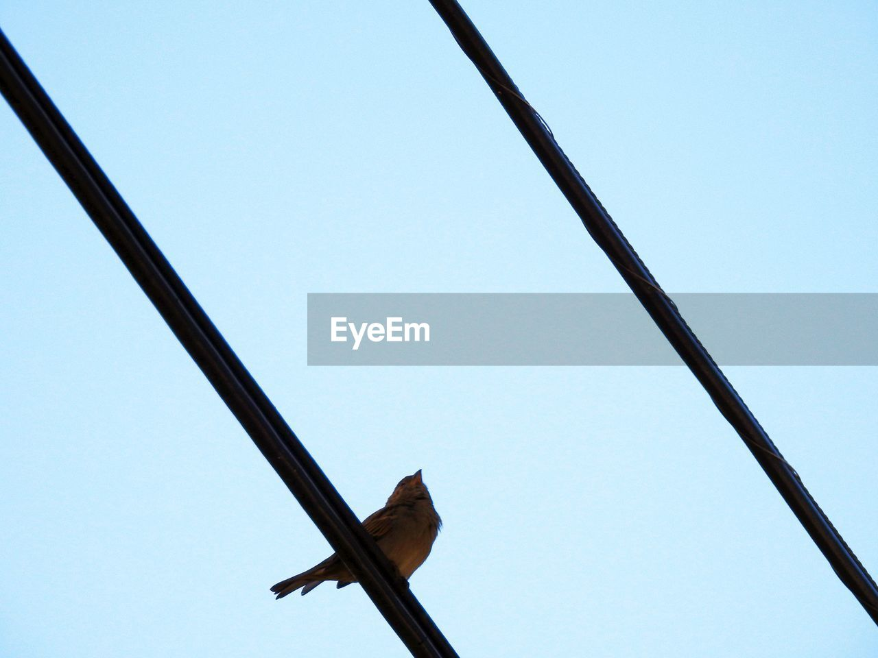 bird, vertebrate, sky, low angle view, animal themes, clear sky, animal, animals in the wild, no people, animal wildlife, one animal, cable, day, nature, metal, electricity, power line, perching, outdoors, blue, directly below, power supply