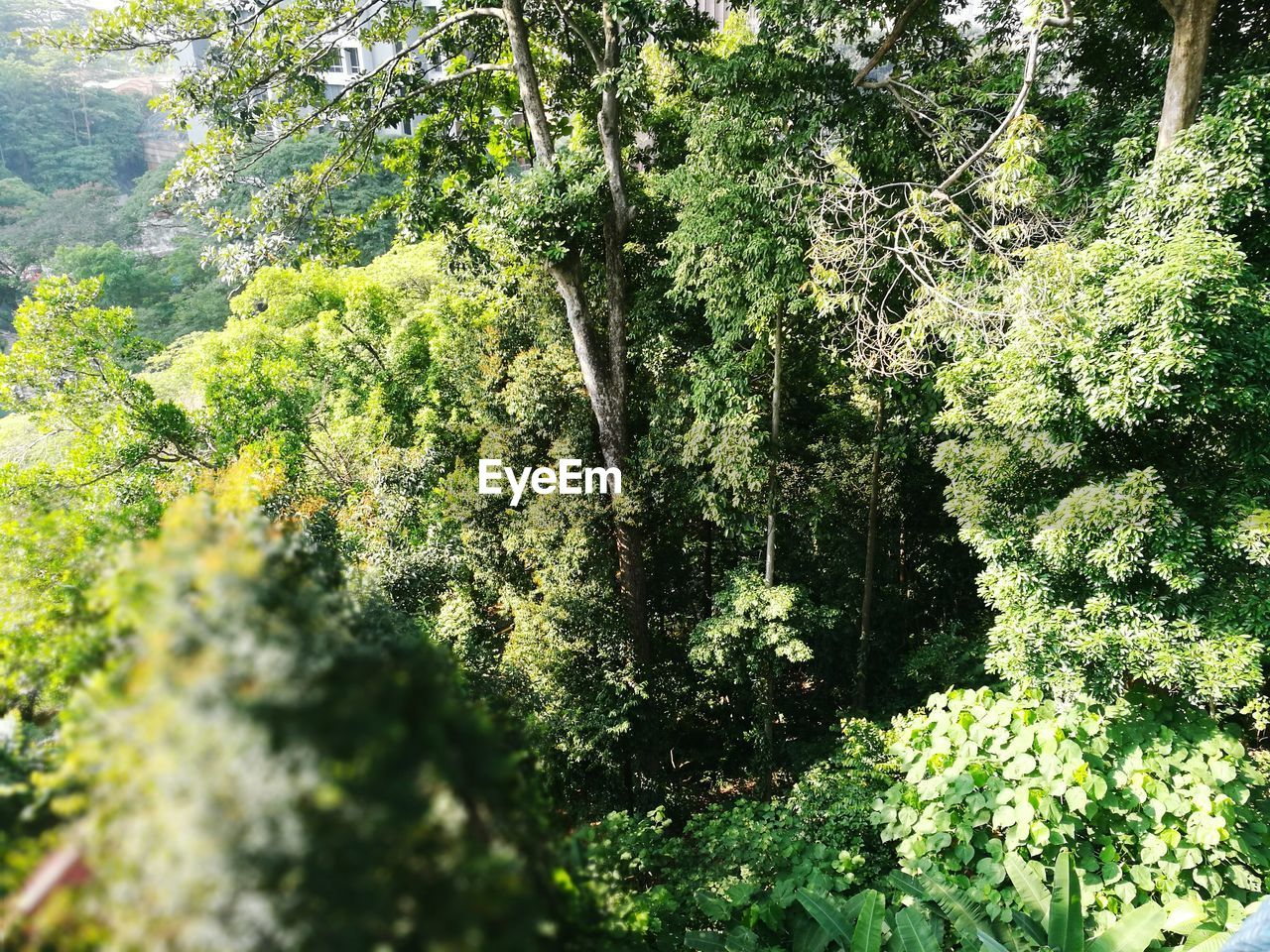nature, growth, green, tree, forest, lush, foliage, day, outdoors, plant, no people, beauty in nature
