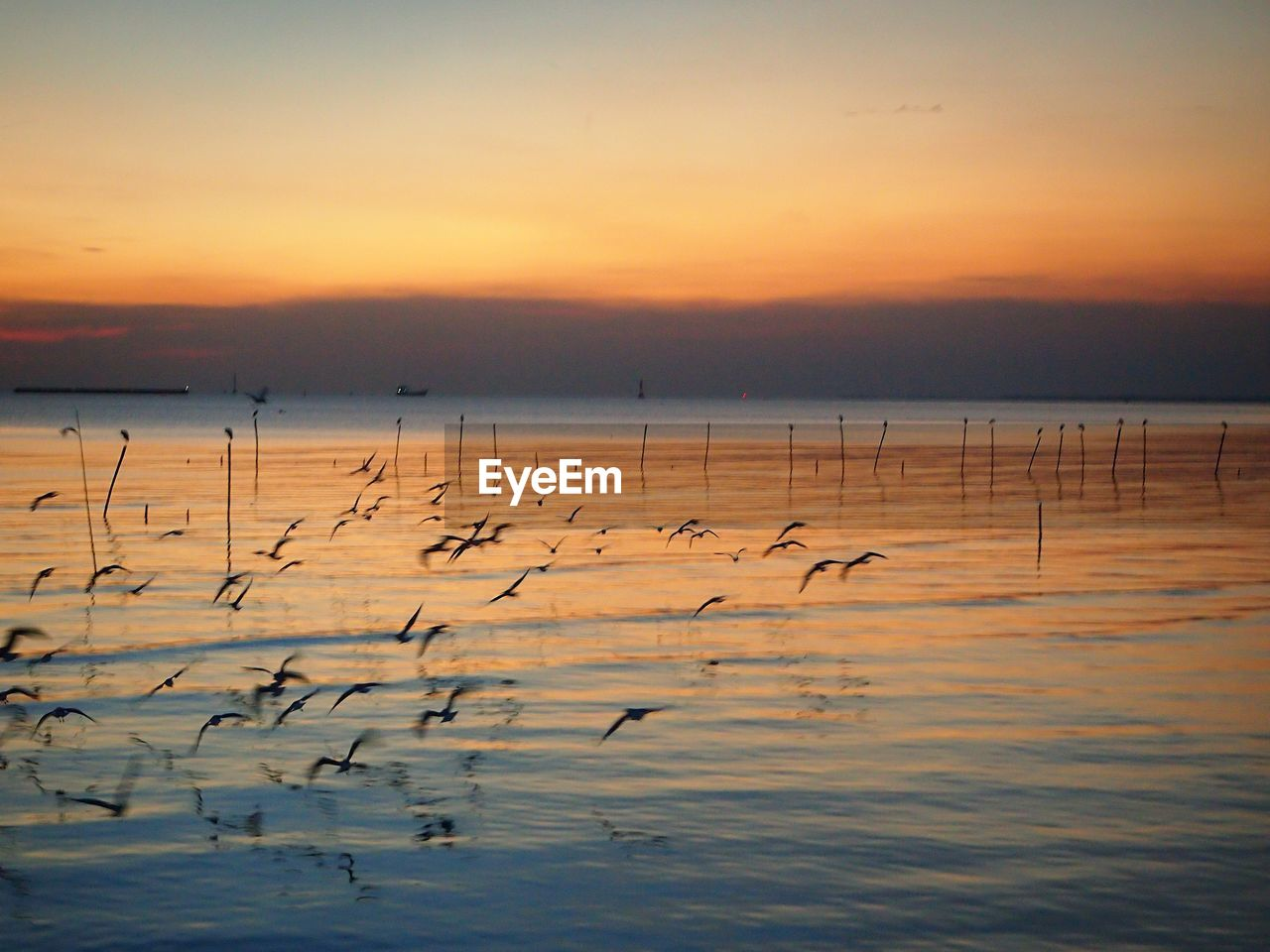 sunset, sky, water, beauty in nature, scenics - nature, nature, large group of animals, tranquility, tranquil scene, orange color, bird, animal themes, group of animals, animal, waterfront, vertebrate, no people, cloud - sky, sea, outdoors, flock of birds