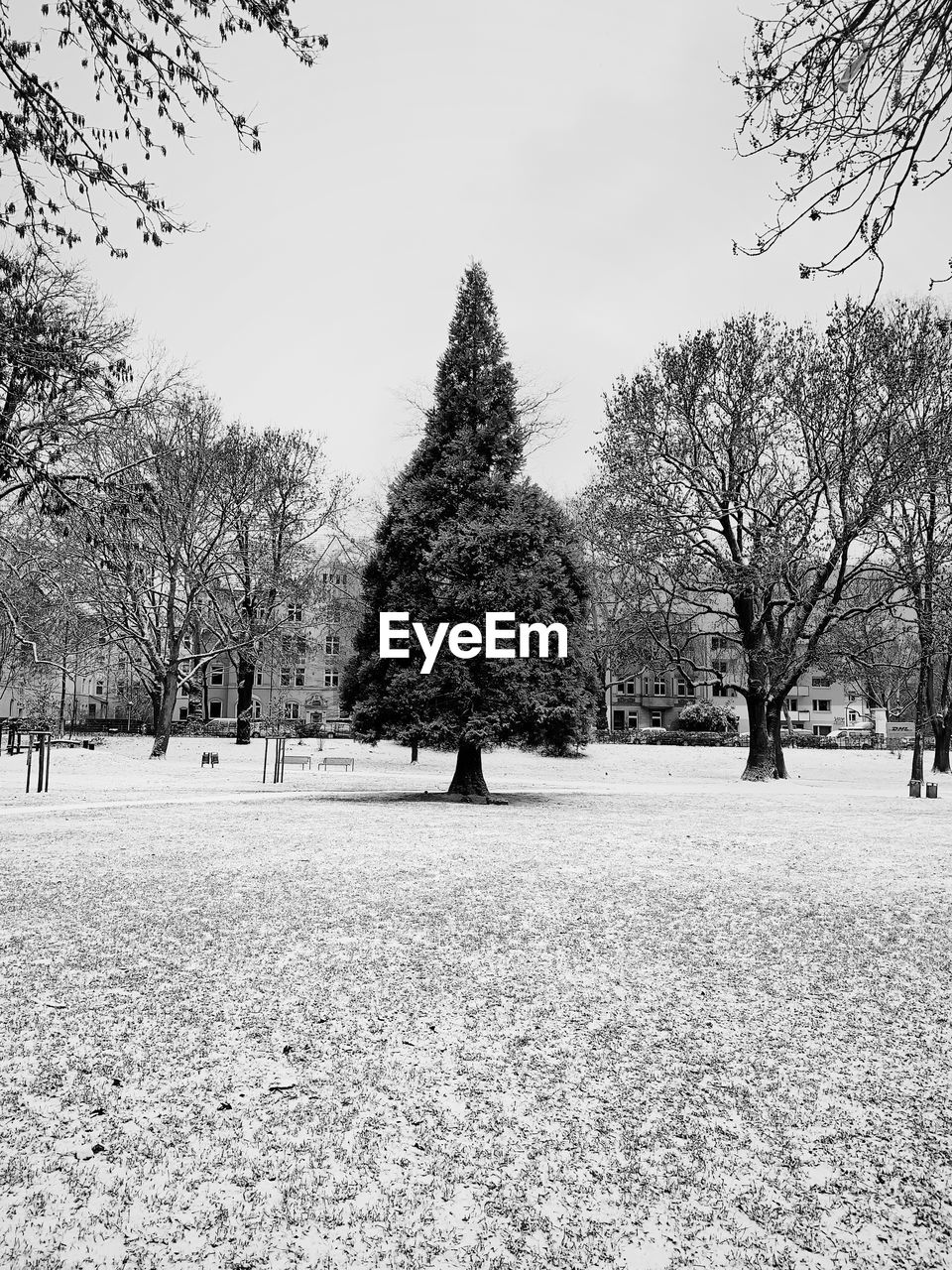 tree, plant, field, nature, sky, land, landscape, environment, winter, beauty in nature, day, tranquility, snow, cold temperature, tranquil scene, growth, outdoors, bare tree, park, no people