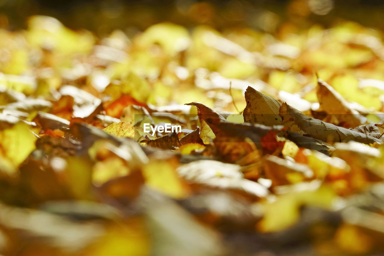 selective focus, close-up, no people, plant part, leaf, full frame, leaves, food, nature, still life, abundance, food and drink, dry, day, cigarette, change, autumn, brown, backgrounds, outdoors