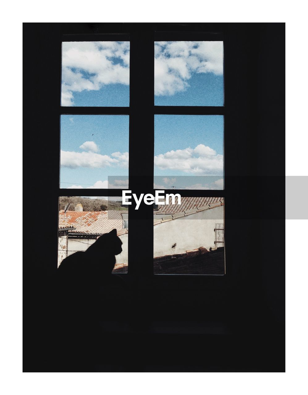 window, silhouette, sky, indoors, looking through window, pets, no people, mammal, animal themes, day, nature, close-up