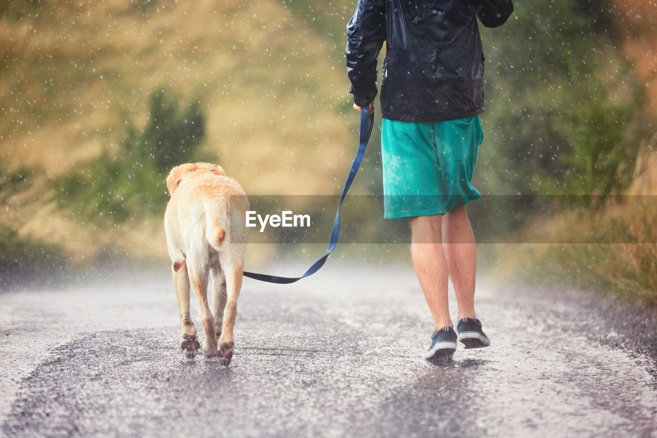 Low Section Of Man Walking With Dog On Road During Rainy Season