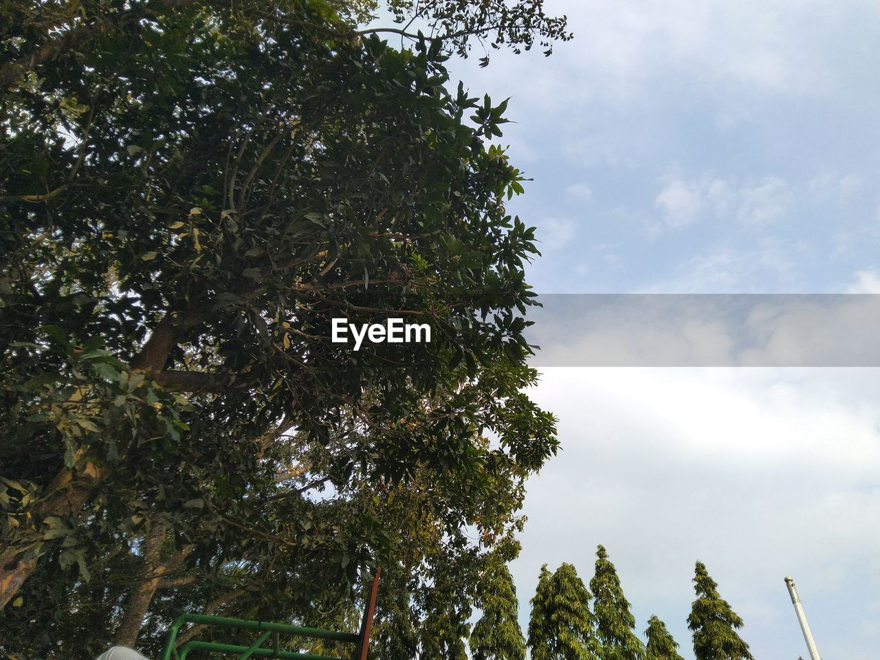 tree, plant, sky, low angle view, growth, cloud - sky, beauty in nature, day, tranquility, nature, no people, green color, outdoors, tranquil scene, scenics - nature, non-urban scene, leaf, idyllic, branch, treetop, tree canopy