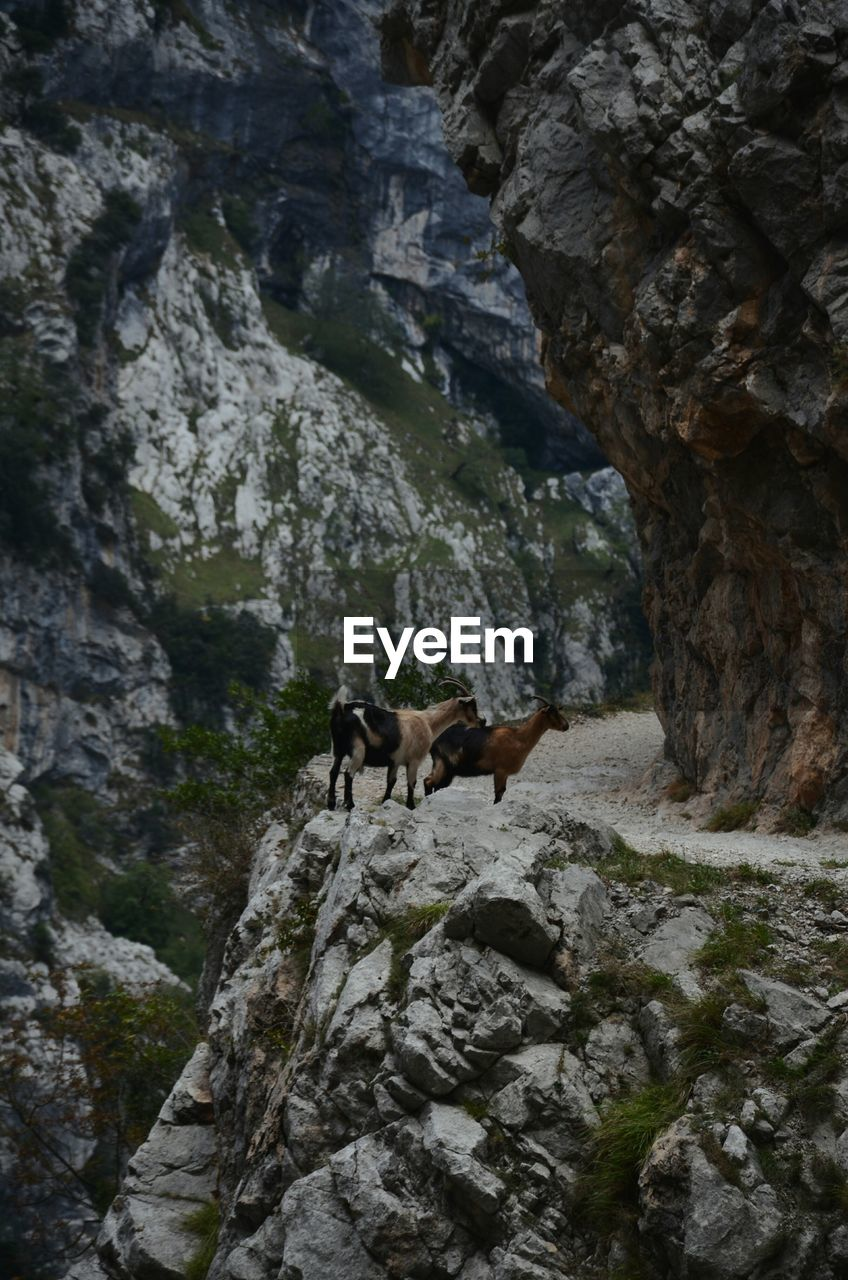 LOW ANGLE VIEW OF HORSE ON CLIFF AGAINST MOUNTAINS