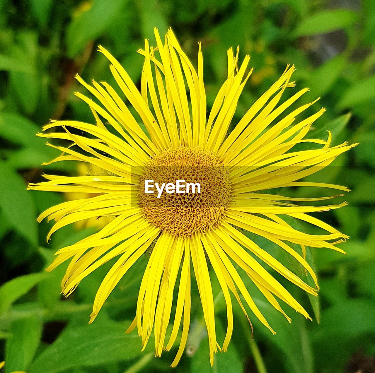 flower, flowering plant, yellow, fragility, plant, vulnerability, flower head, freshness, beauty in nature, growth, inflorescence, close-up, petal, focus on foreground, pollen, nature, no people, day, land