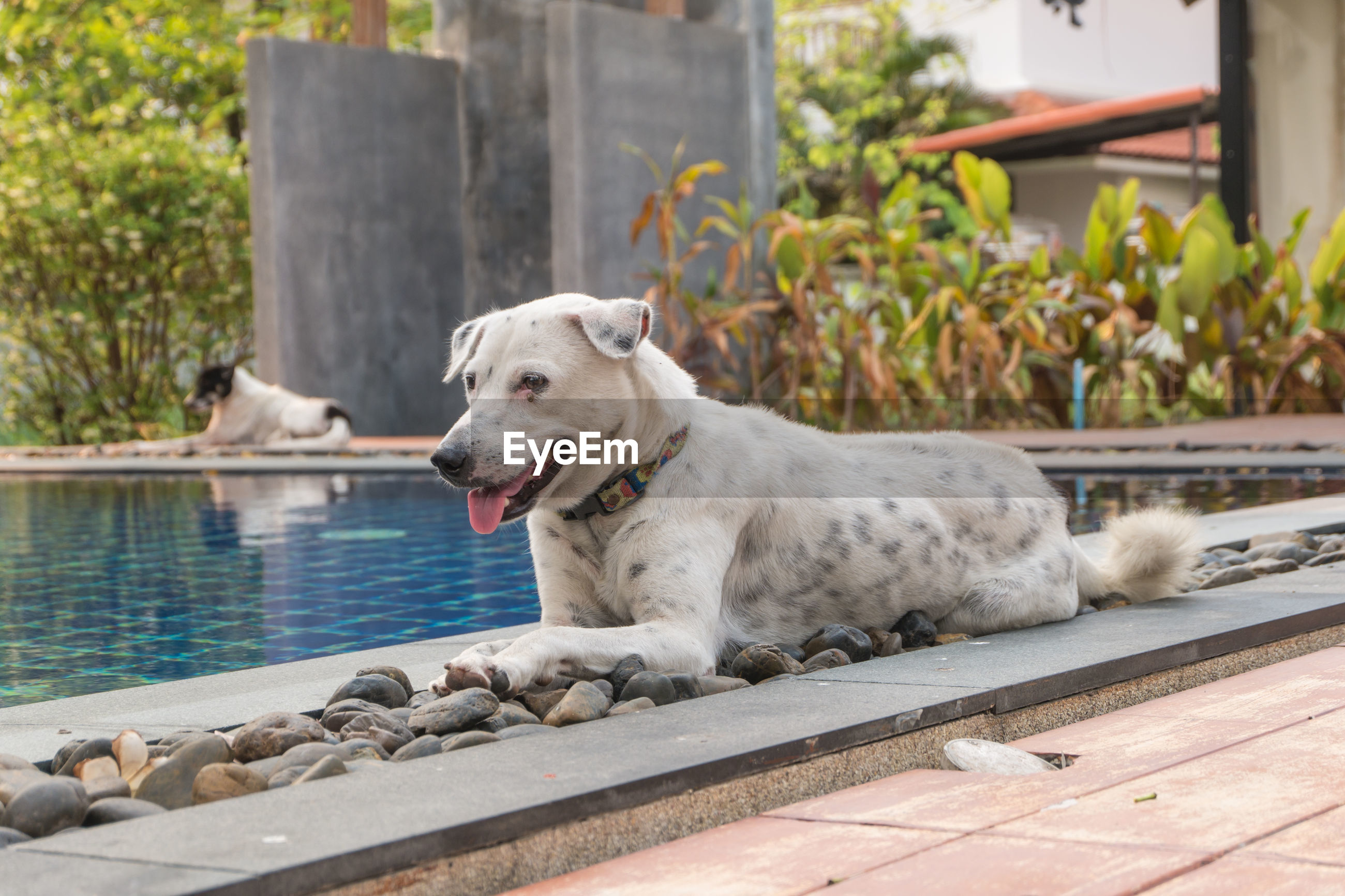 Close-up of dog sitting on stones by swimming pool