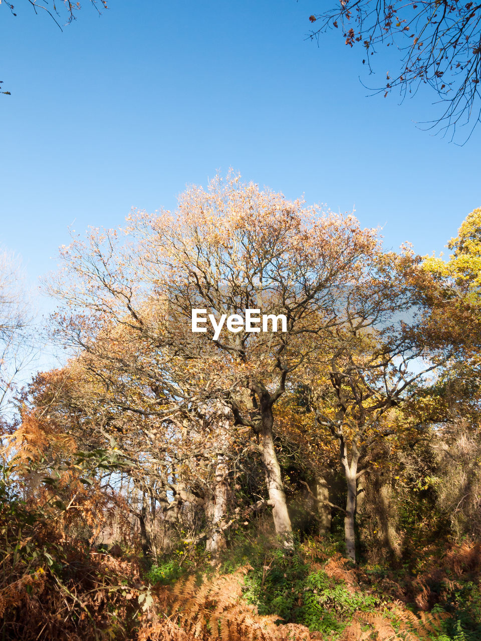 autumn, tree, nature, beauty in nature, branch, day, outdoors, tranquility, no people, clear sky, growth, forest, sky, freshness