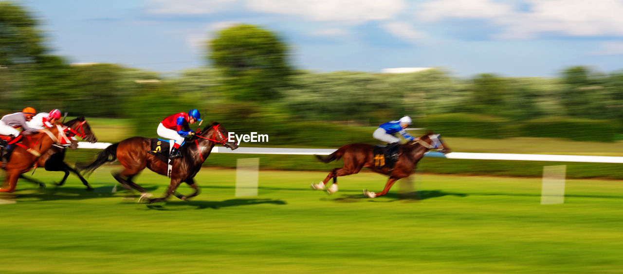 horse, domestic animals, competition, horseback riding, mammal, jockey, horse racing, speed, sport, running, riding, grass, competitive sport, tree, field, real people, green color, motion, day, sports race, men, gambling, sports track, outdoors, nature, sky
