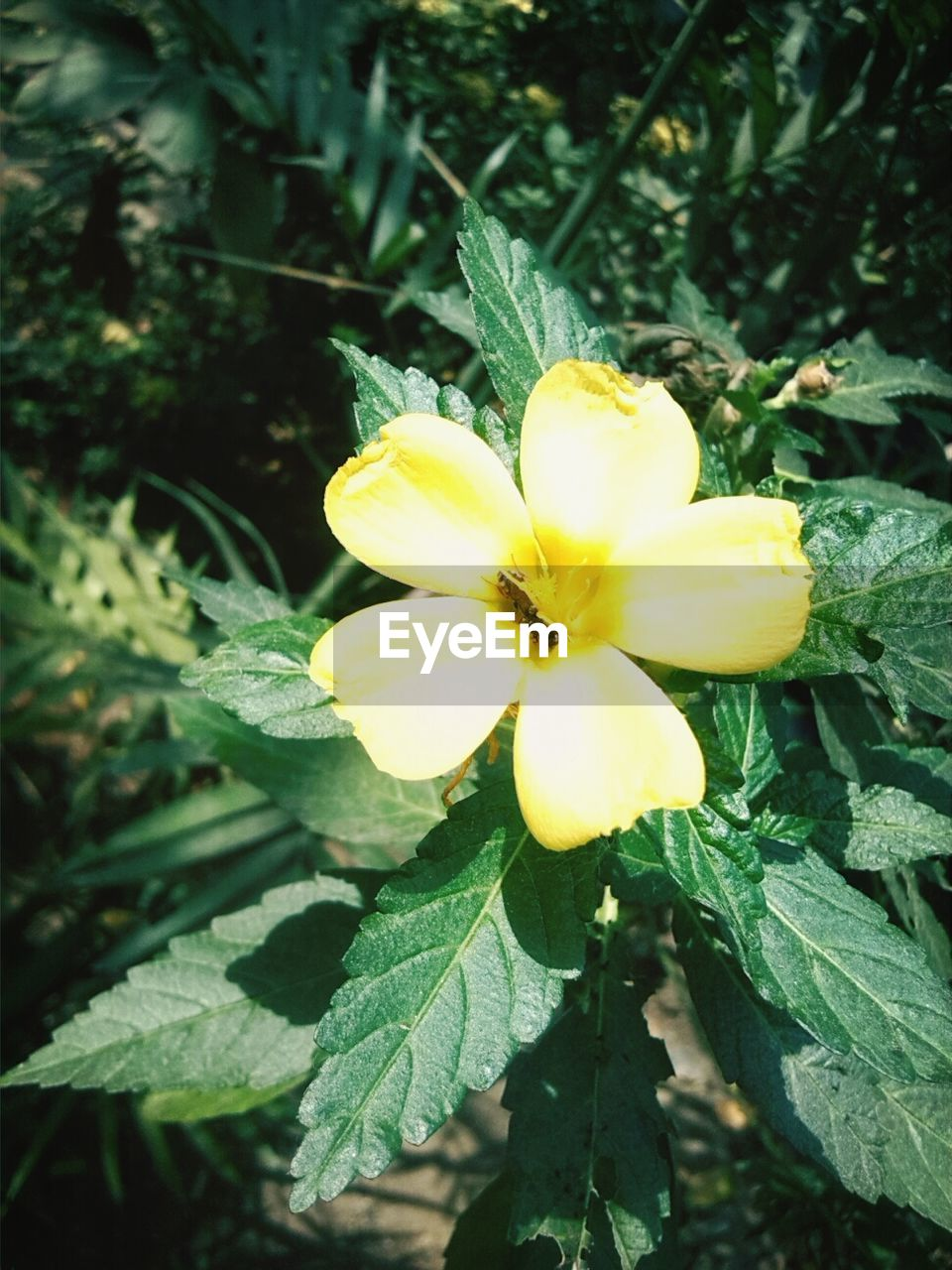flower, petal, growth, freshness, fragility, yellow, beauty in nature, flower head, nature, plant, outdoors, day, blooming, leaf, green color, no people, close-up