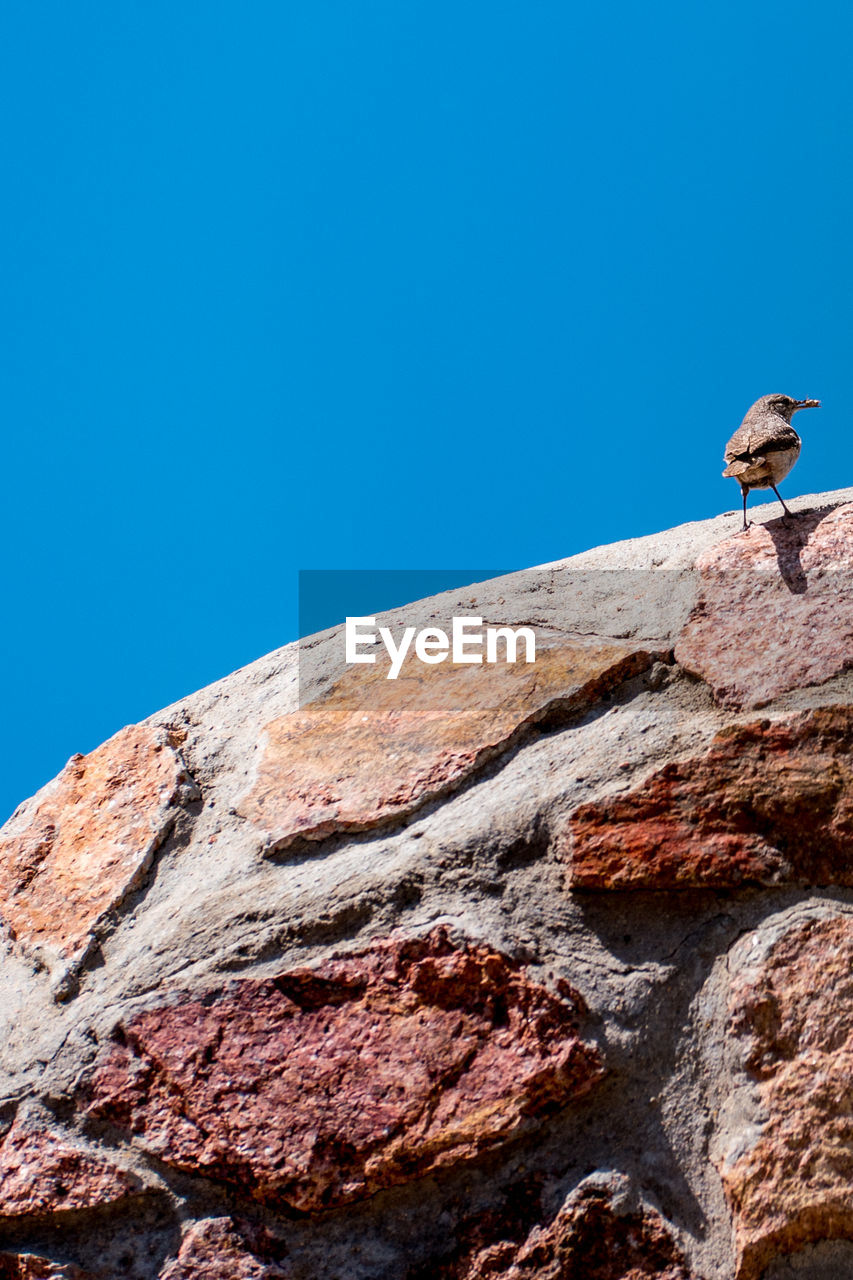 blue, clear sky, animal, sky, animal wildlife, animals in the wild, animal themes, copy space, low angle view, vertebrate, day, bird, rock, nature, one animal, solid, no people, rock - object, perching, sunlight, outdoors