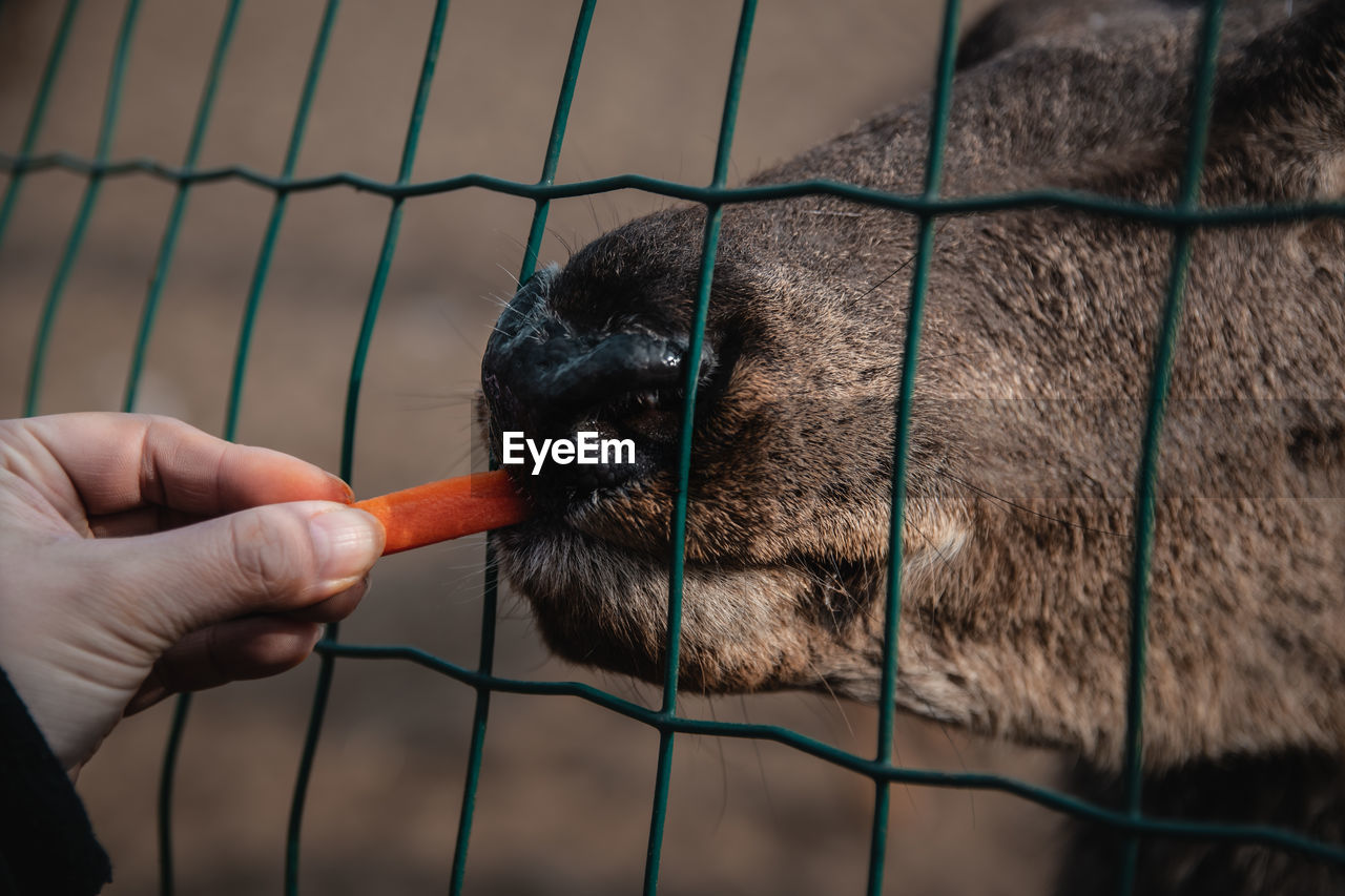 Cropped hand of person feeding deer through fence in zoo