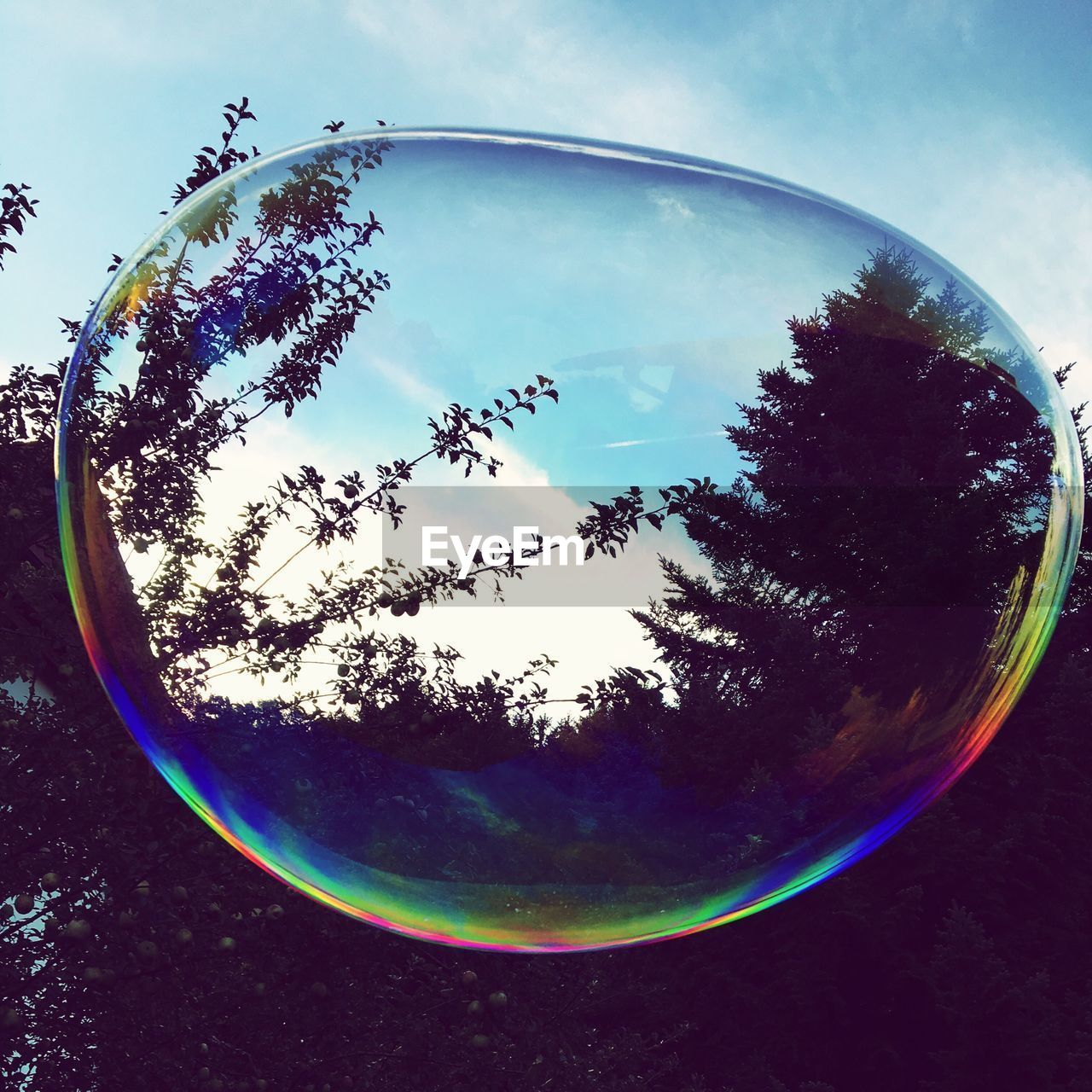 circle, reflection, bubble, no people, day, tree, sky, close-up, outdoors, nature, fish-eye lens, bubble wand, beauty in nature, fragility, water