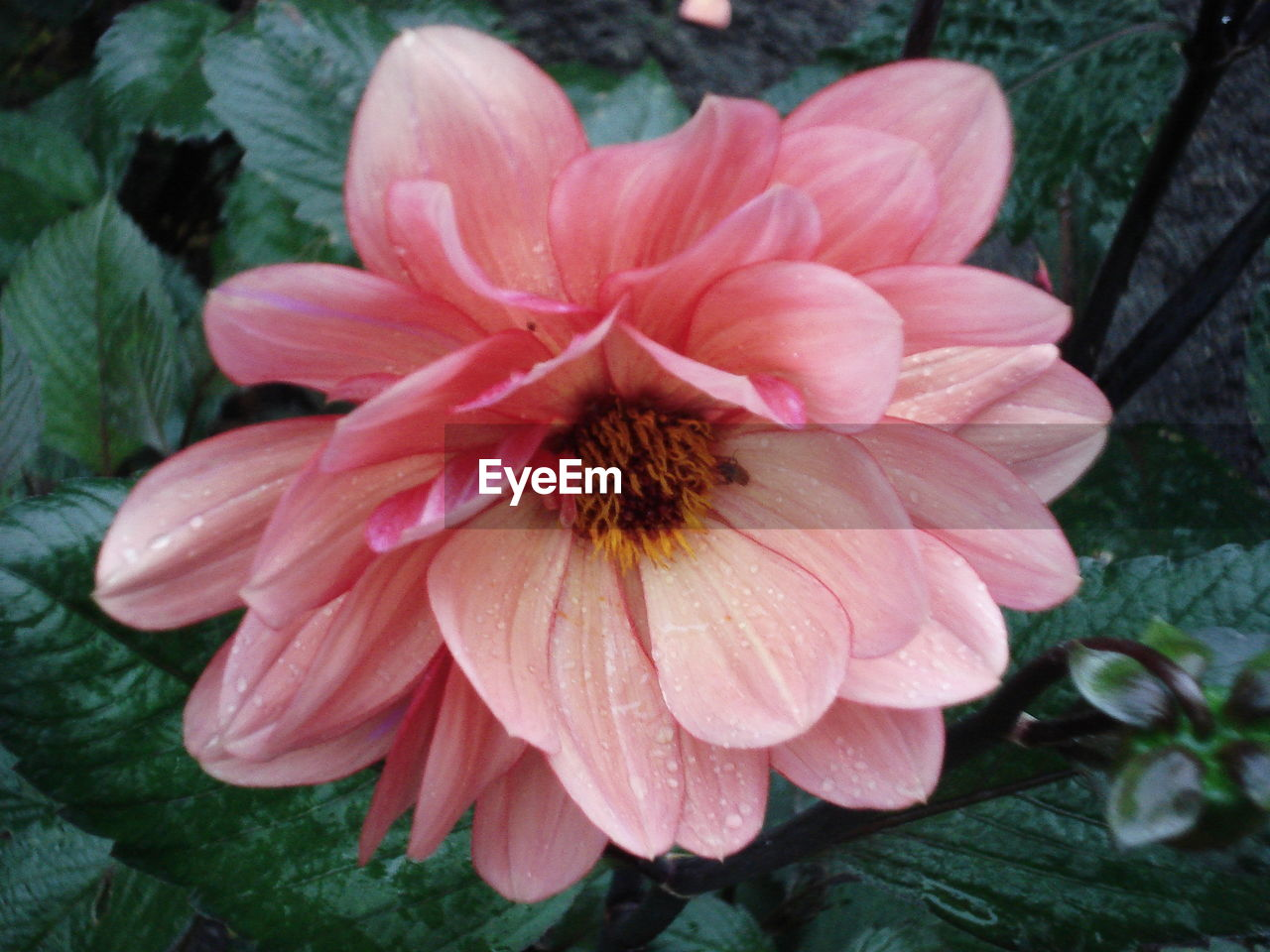 flower, petal, flower head, fragility, nature, pink color, growth, beauty in nature, freshness, plant, close-up, outdoors, pollen, no people, day, blooming