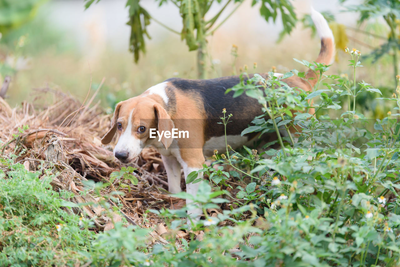 one animal, animal themes, mammal, dog, canine, animal, pets, domestic, domestic animals, vertebrate, plant, nature, land, no people, selective focus, day, green color, growth, field, plant part, outdoors, animal head