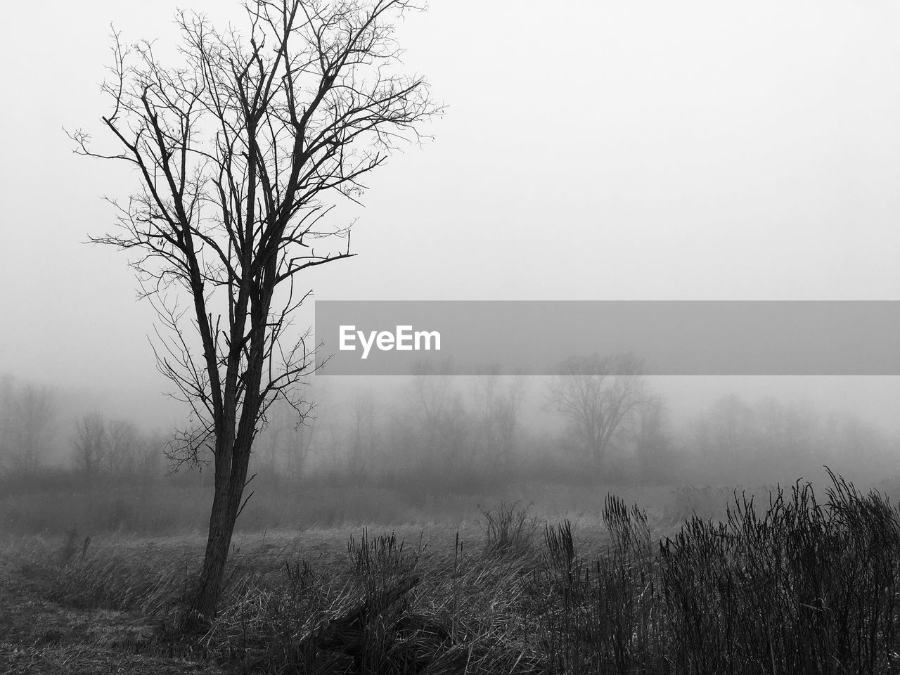 tranquility, landscape, tranquil scene, bare tree, fog, nature, beauty in nature, tree, outdoors, scenics, mist, hazy, day, no people, lone, grass, sky