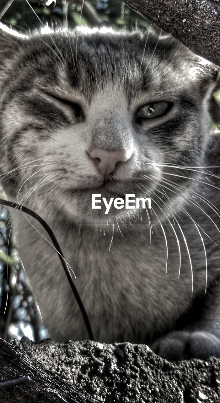 one animal, mammal, animal themes, animal, pets, domestic, cat, domestic cat, domestic animals, feline, vertebrate, close-up, whisker, no people, focus on foreground, animal body part, animal head, looking away, looking, day, snout, animal nose, animal mouth, animal eye