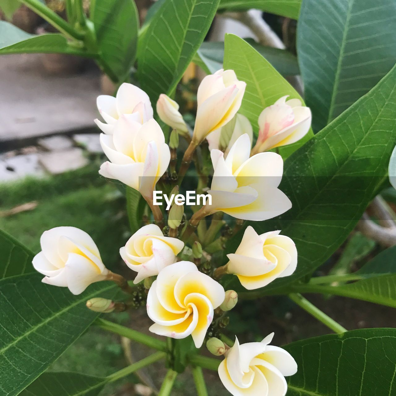 leaf, flower, green color, freshness, growth, plant, day, beauty in nature, fragility, nature, no people, petal, outdoors, close-up, blooming, flower head