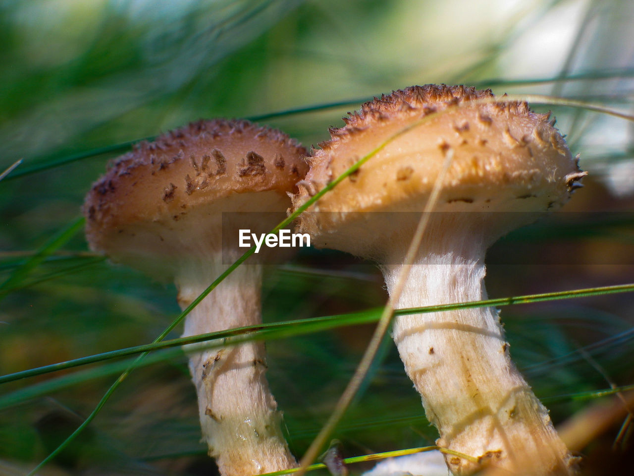 plant, mushroom, close-up, growth, fungus, food, no people, vegetable, focus on foreground, nature, day, land, food and drink, freshness, selective focus, beauty in nature, outdoors, field, grass, edible mushroom, toadstool