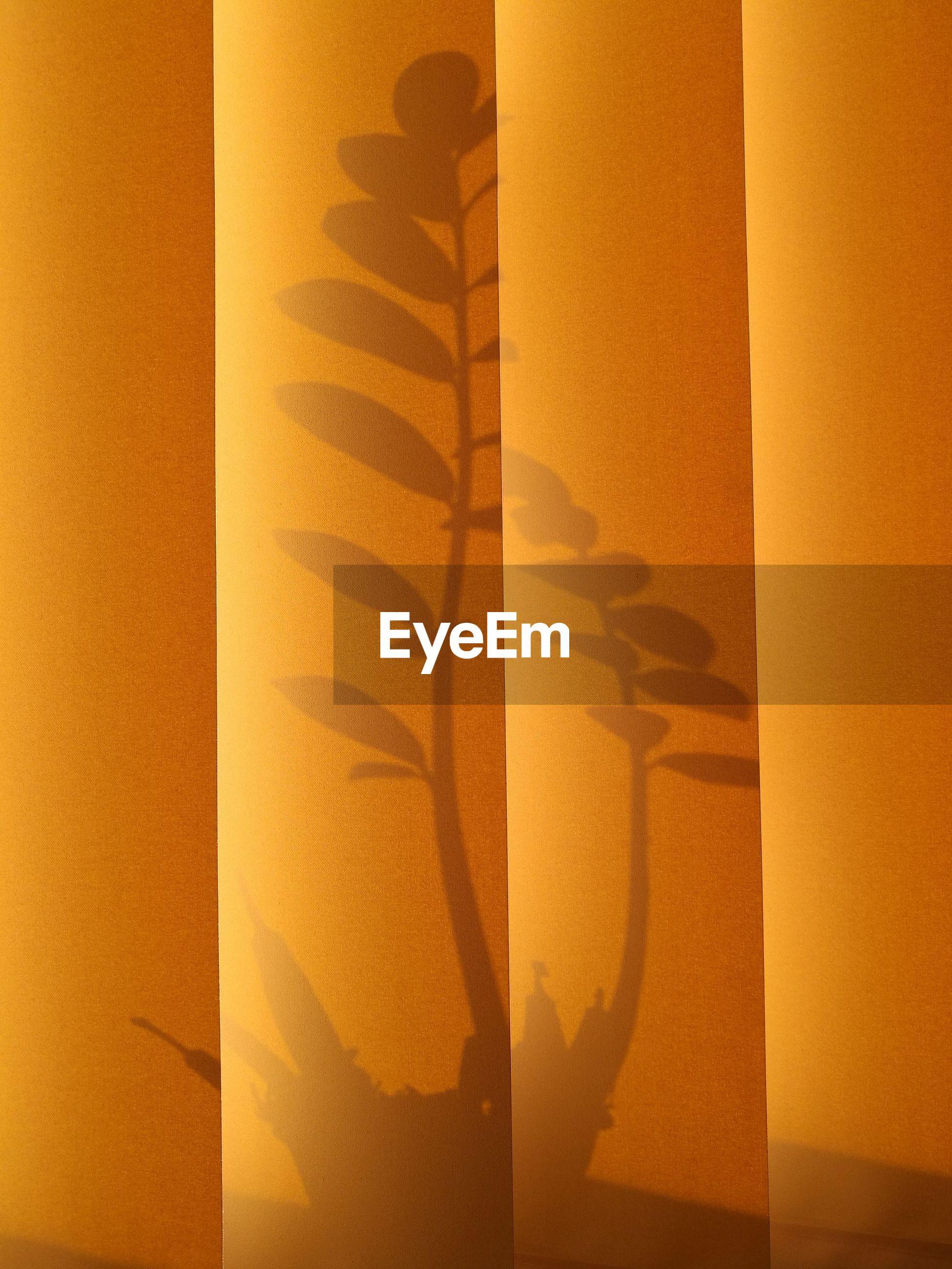 Full frame shot of yellow blinds