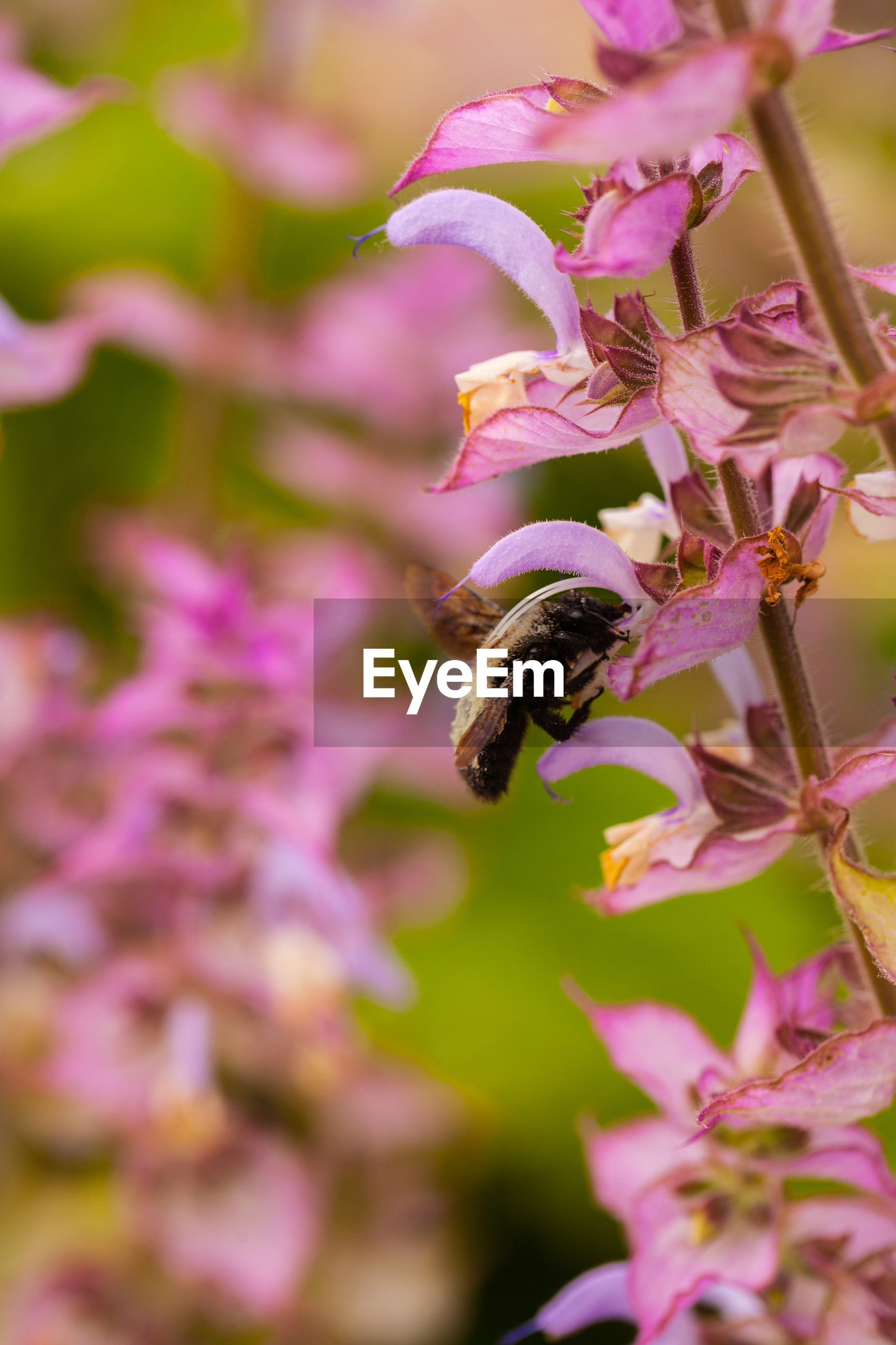flowering plant, flower, invertebrate, one animal, animal themes, plant, animals in the wild, insect, fragility, beauty in nature, animal wildlife, animal, vulnerability, close-up, freshness, growth, bee, petal, nature, selective focus, flower head, pollination, no people, purple, outdoors