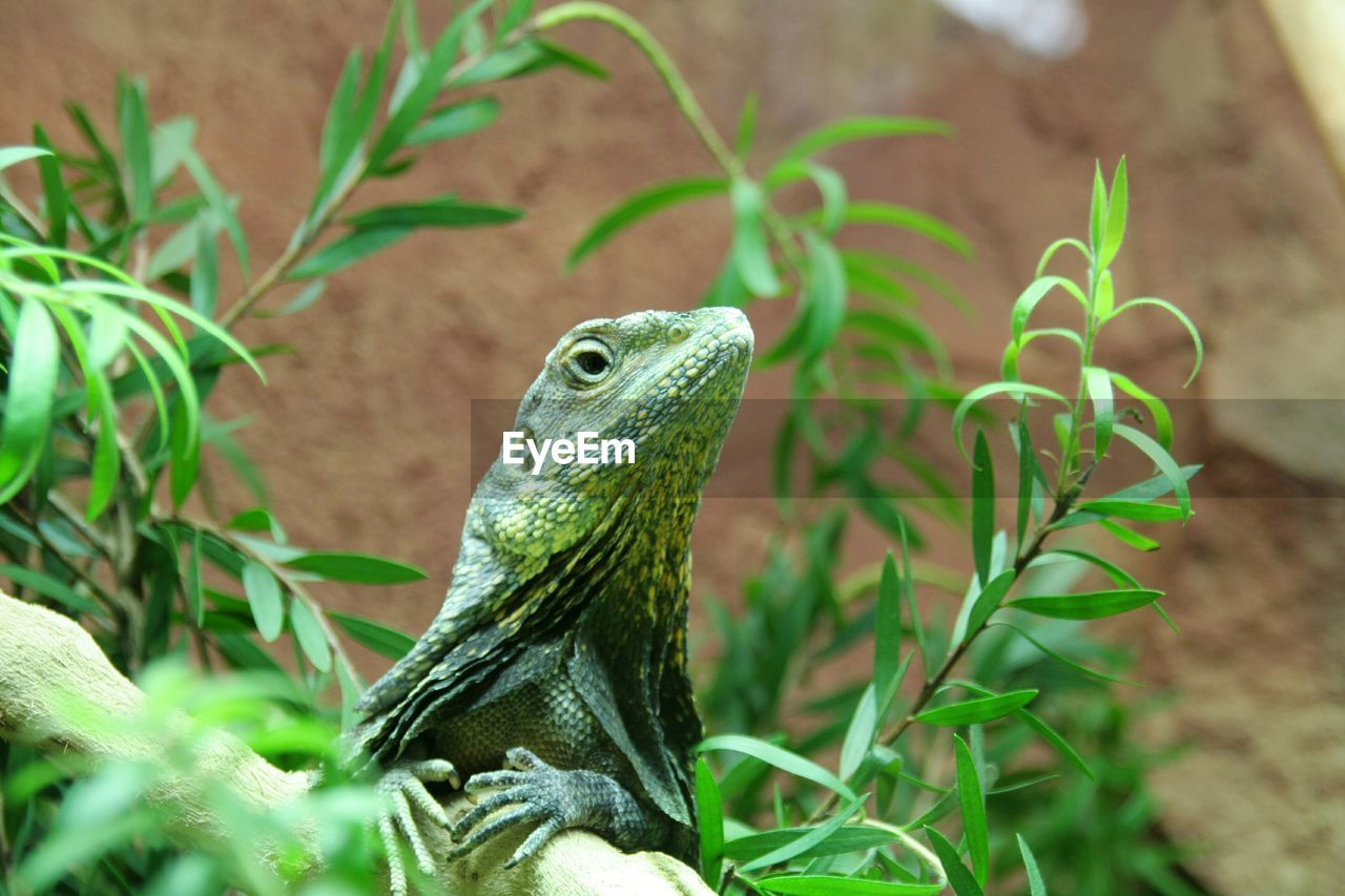animal themes, animal, vertebrate, animals in the wild, animal wildlife, green color, one animal, plant, no people, nature, close-up, day, growth, looking, looking away, lizard, plant part, leaf, outdoors, reptile, animal head, turquoise colored