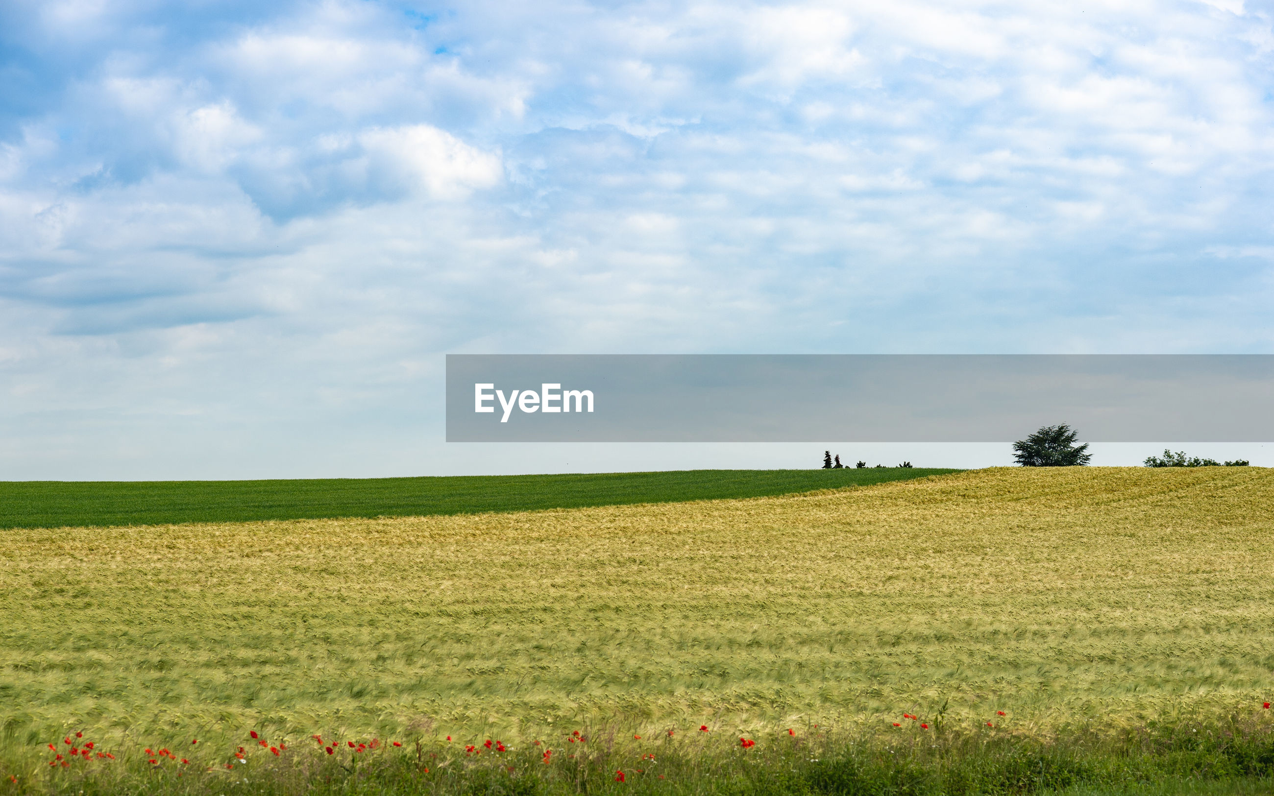 SCENIC VIEW OF FARM FIELD AGAINST SKY