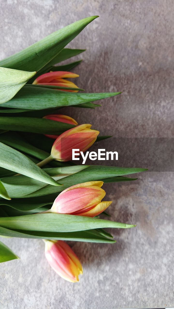flowering plant, flower, fragility, freshness, vulnerability, beauty in nature, plant, petal, close-up, growth, flower head, inflorescence, nature, green color, no people, day, high angle view, tulip, plant part, leaf, outdoors, softness, sepal