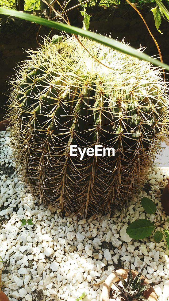 cactus, growth, thorn, nature, plant, outdoors, day, spiked, no people, green color, beauty in nature, close-up