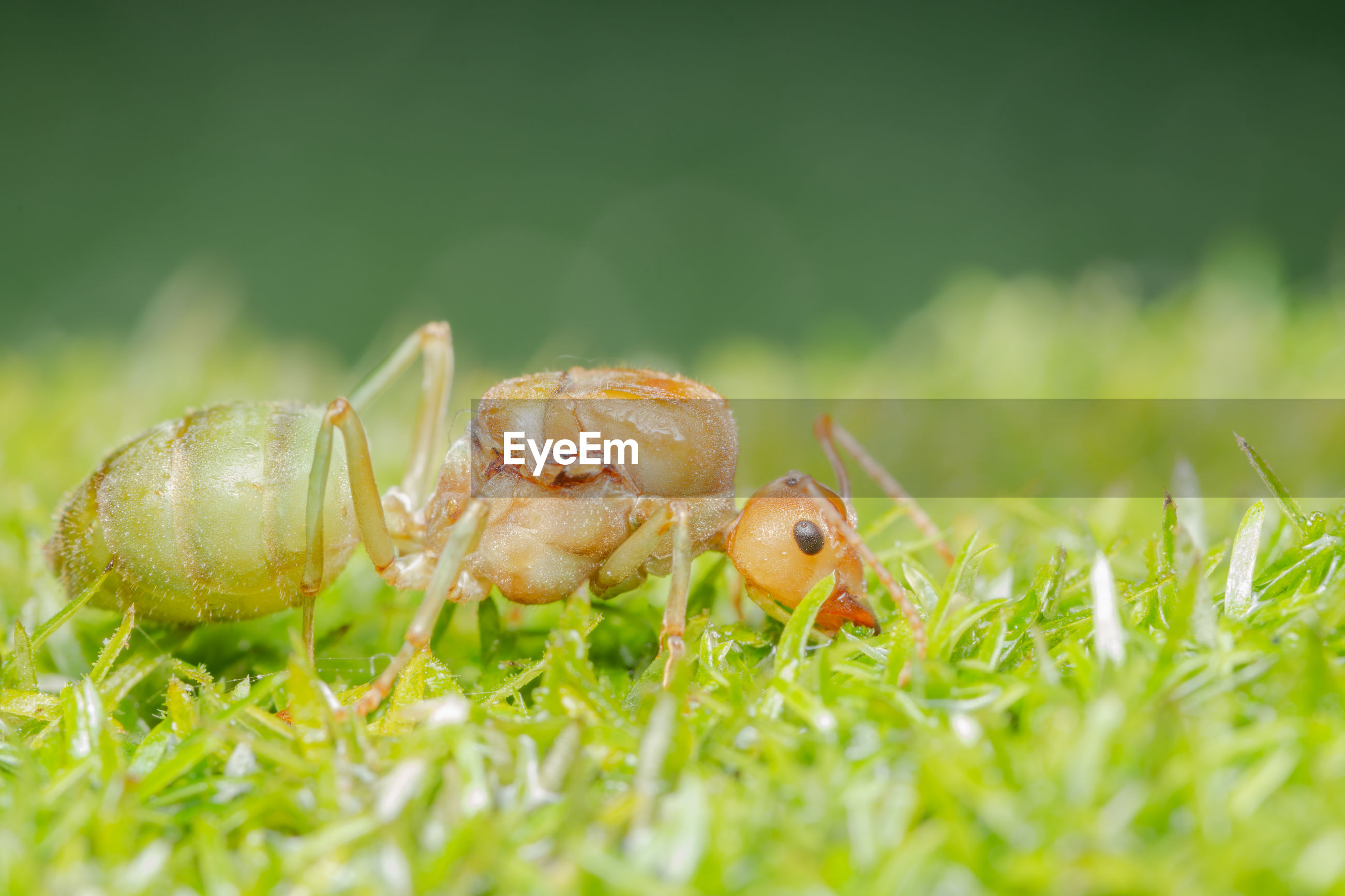 Close-up of ant on grass