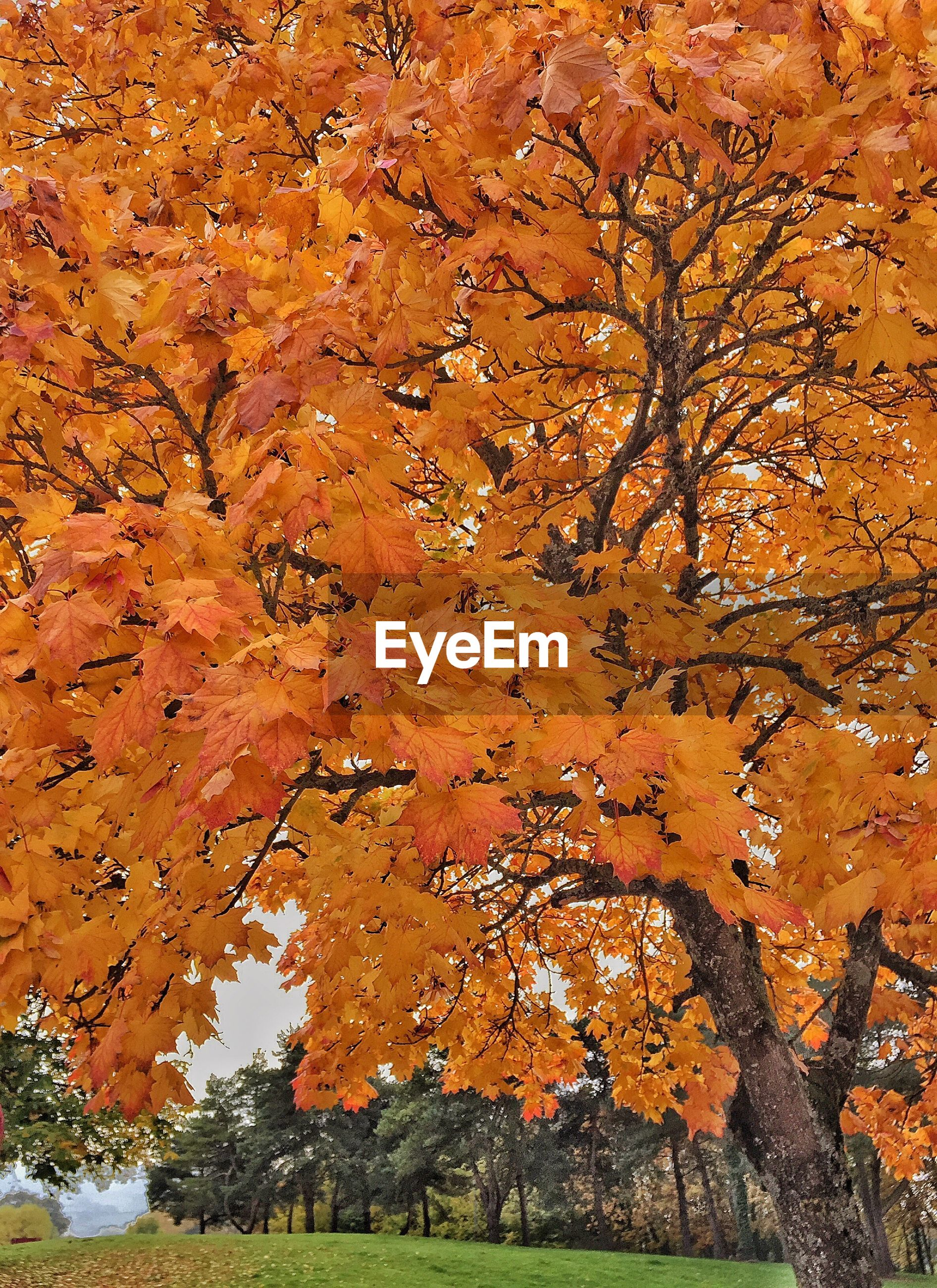 orange color, change, autumn, nature, tree, no people, full frame, growth, close-up, beauty in nature, branch, backgrounds, day, outdoors