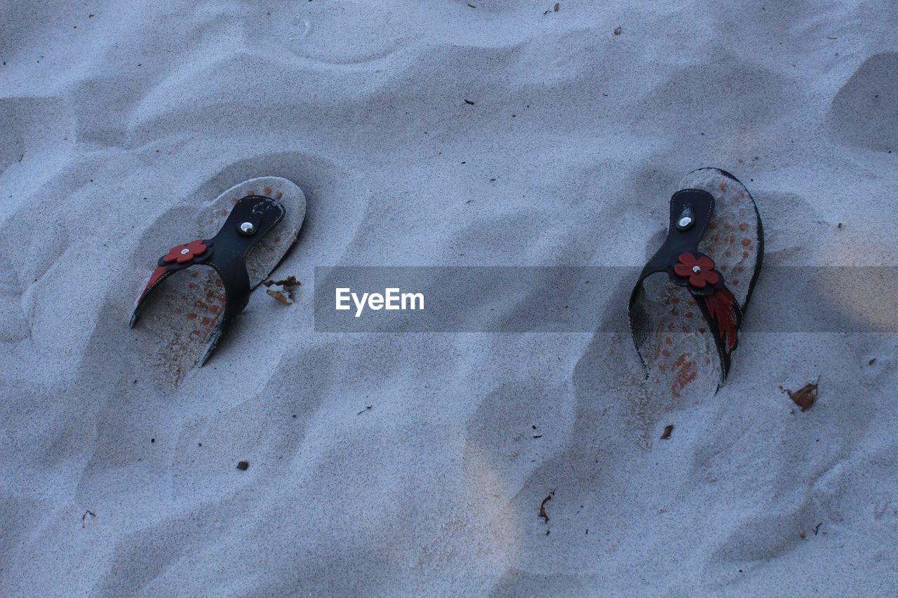HIGH ANGLE VIEW OF ANIMAL ON BEACH