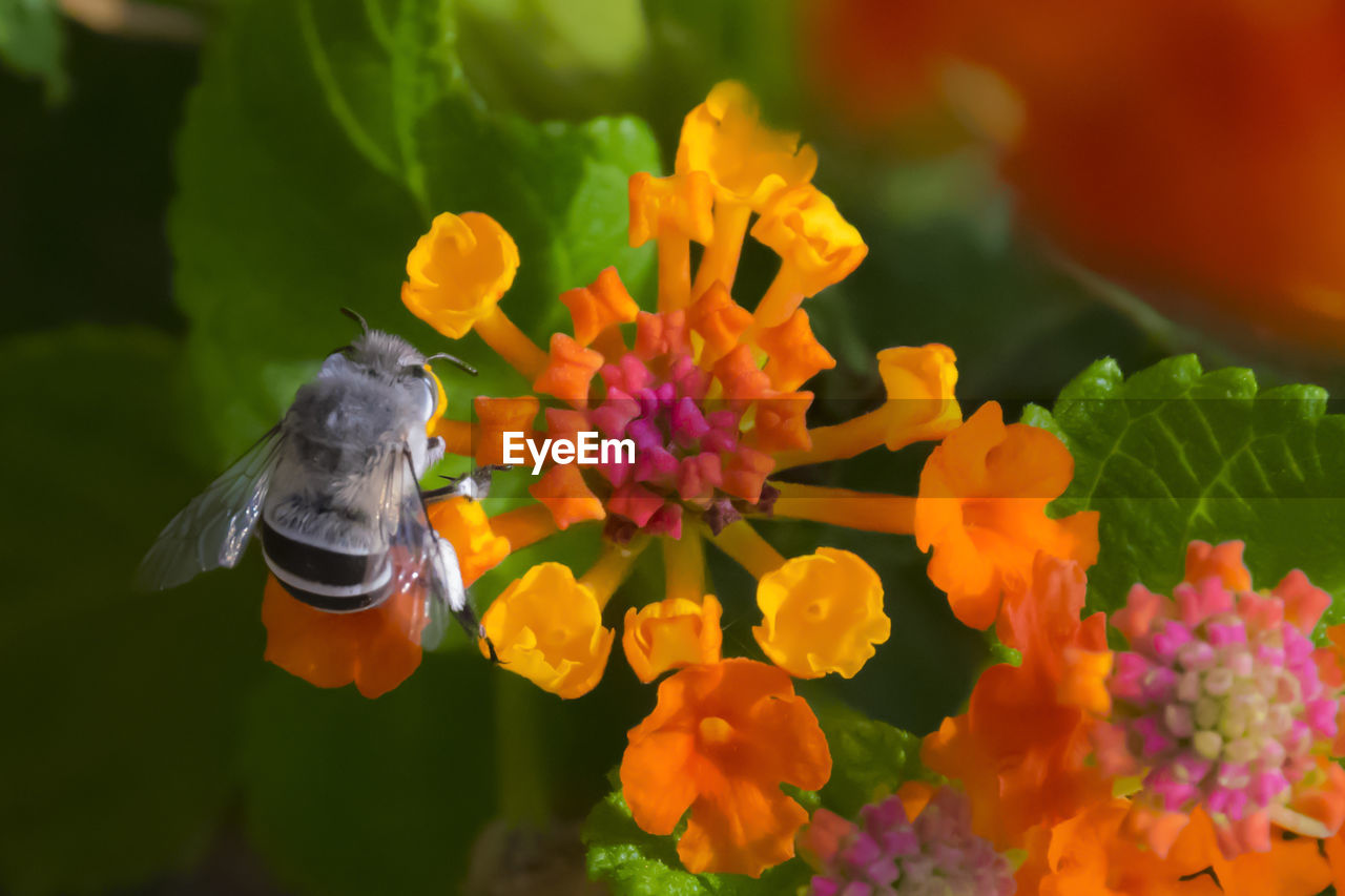 flowering plant, flower, plant, animal themes, petal, beauty in nature, animal, freshness, flower head, fragility, vulnerability, growth, one animal, animal wildlife, animals in the wild, inflorescence, close-up, nature, no people, flying, pollination, purple, butterfly - insect