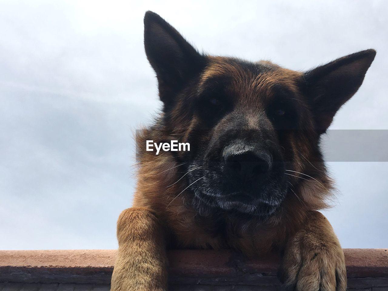 Close-up portrait of german shepherd dog against sky