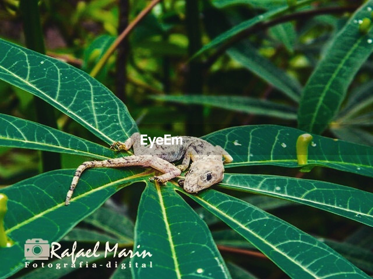 leaf, one animal, green color, animals in the wild, animal themes, insect, animal wildlife, day, nature, plant, outdoors, growth, close-up, no people