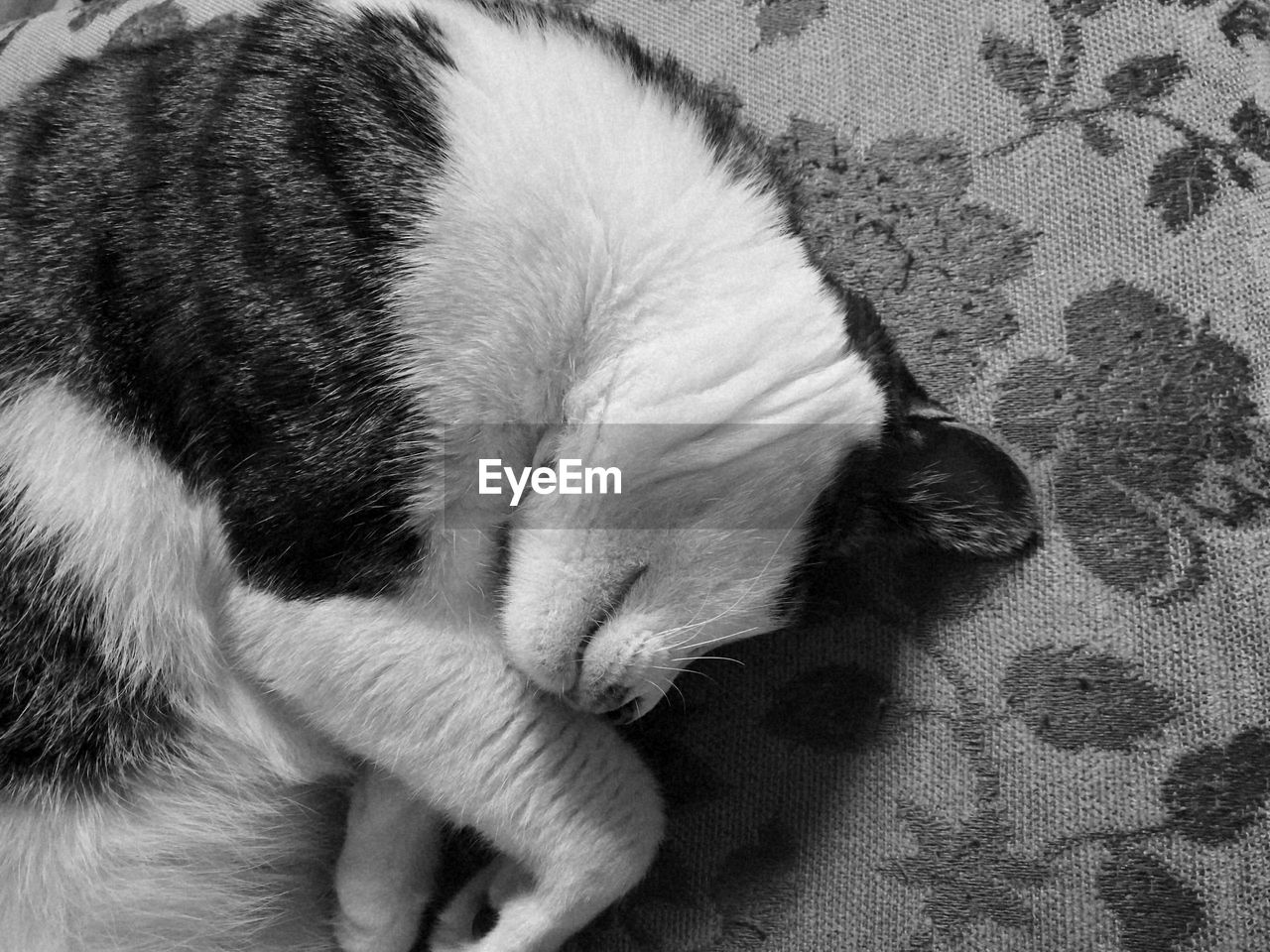 one animal, pets, animal themes, sleeping, high angle view, domestic animals, mammal, eyes closed, indoors, no people, domestic cat, close-up, relaxation, day