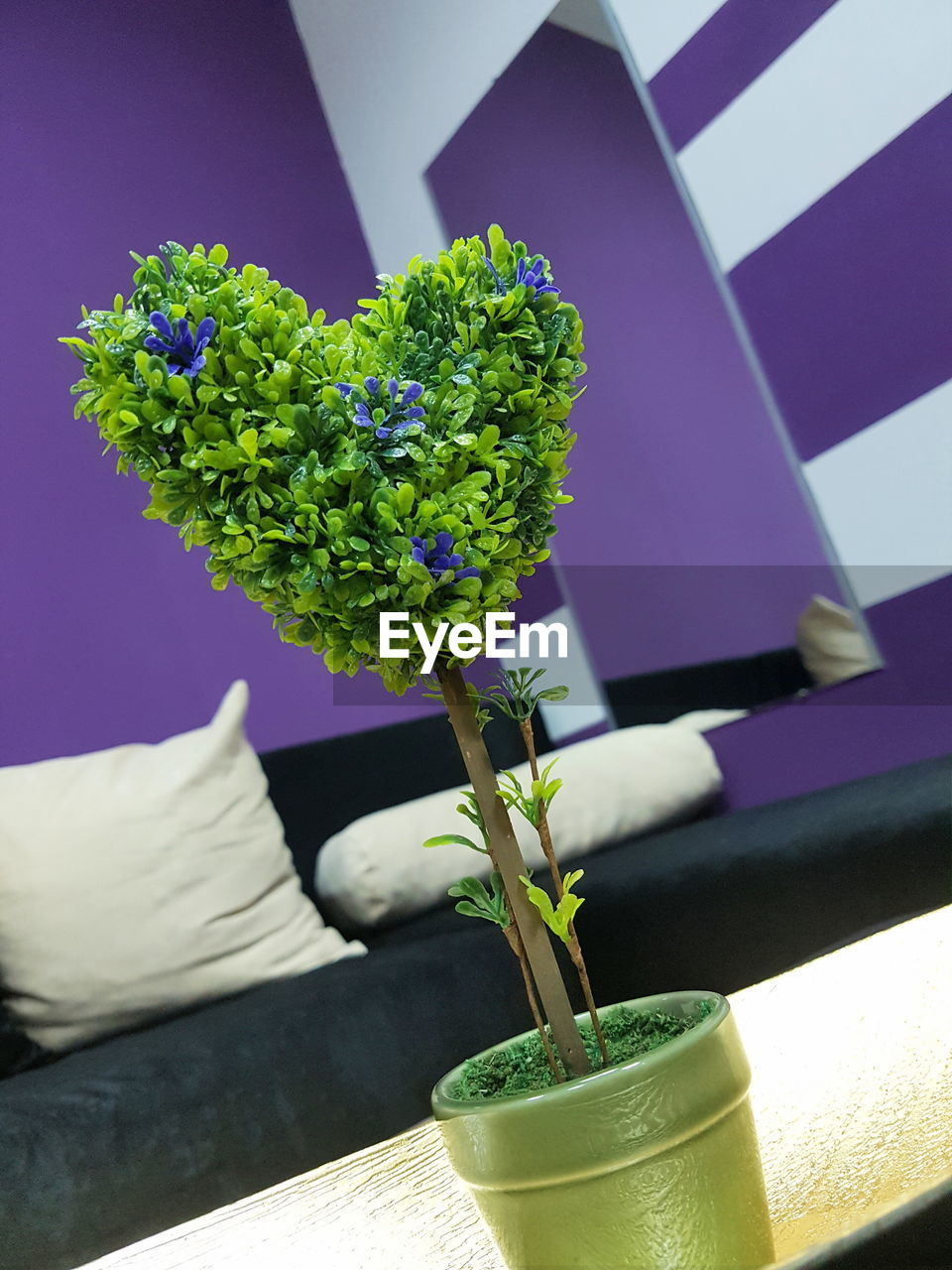 plant, flower, nature, growth, green color, close-up, flowering plant, indoors, freshness, vase, beauty in nature, potted plant, day, no people, table, plant part, leaf, focus on foreground, sunlight, flower arrangement, flower pot, flower head, houseplant, bunch of flowers