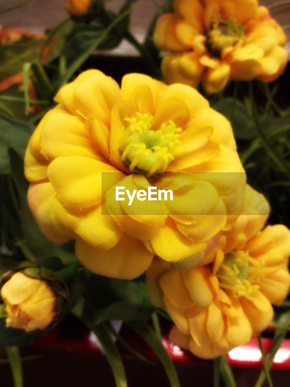 flower, yellow, petal, beauty in nature, freshness, flower head, fragility, nature, plant, growth, no people, outdoors, blooming, close-up, day