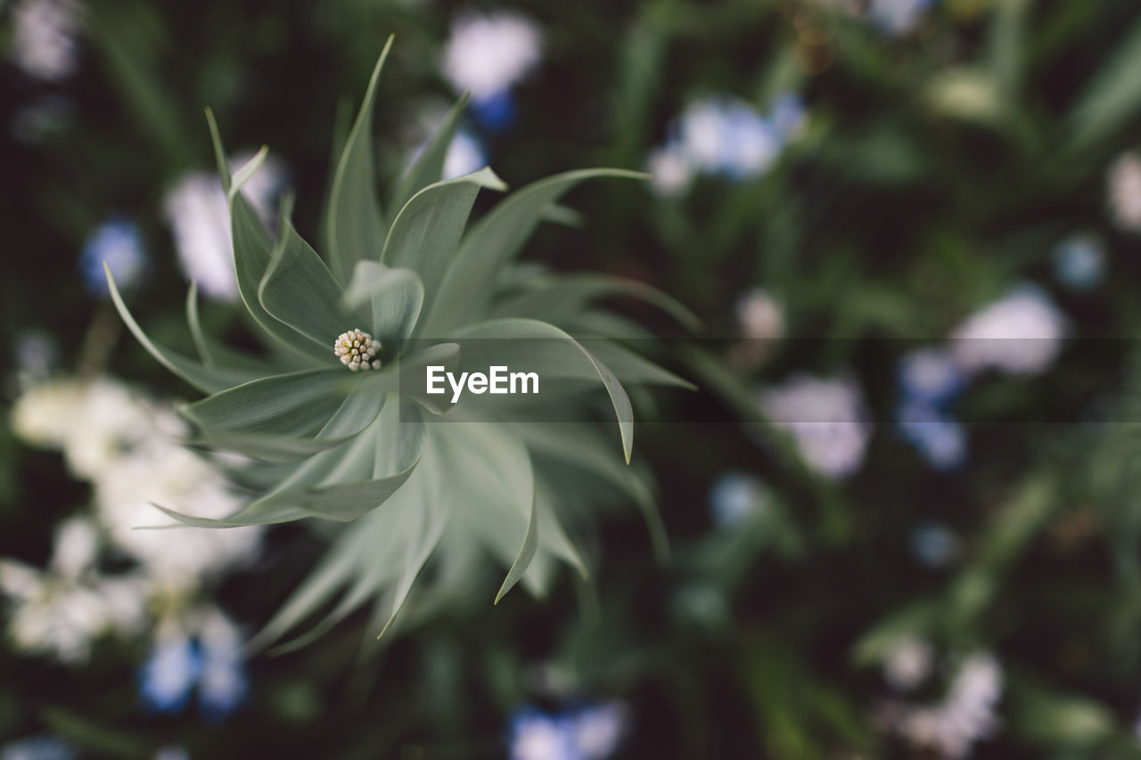 plant, freshness, growth, fragility, vulnerability, beauty in nature, flower, close-up, flowering plant, focus on foreground, day, flower head, nature, petal, inflorescence, no people, green color, white color, selective focus, outdoors, pollen